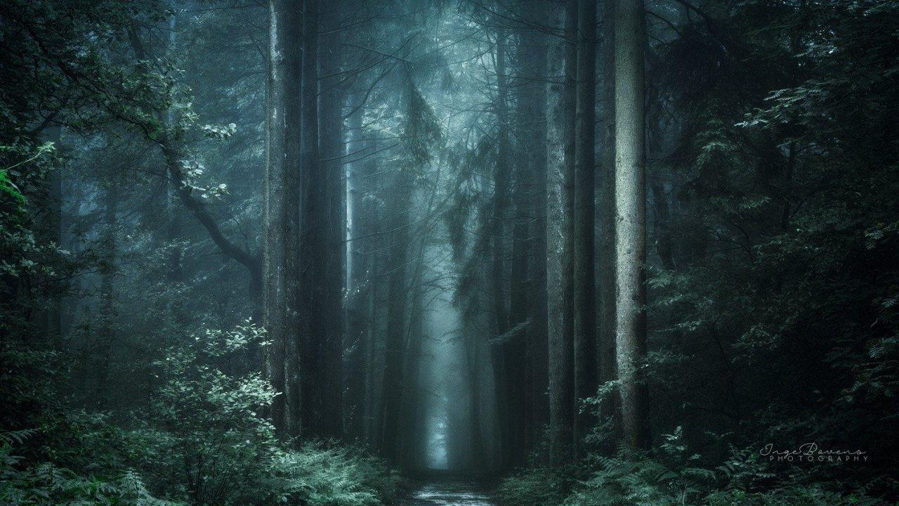 Rain Forest Tumblr Wallpapers Wallpaper Cave
