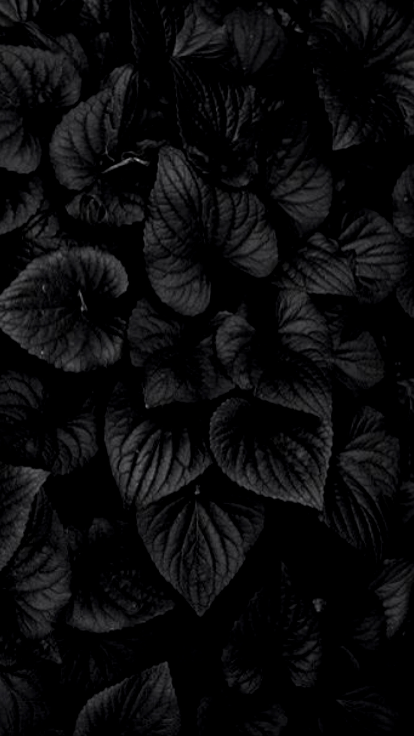 Amoled Plant Wallpapers Wallpaper Cave