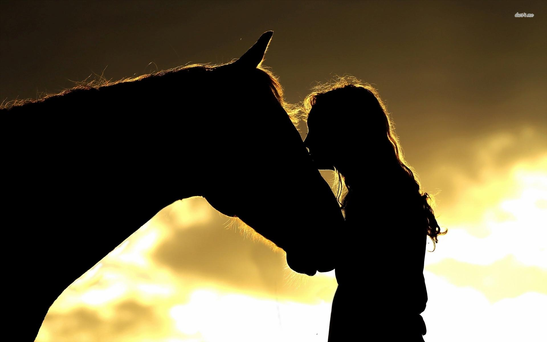 Horse Silhouette Wallpapers - Wallpaper Cave