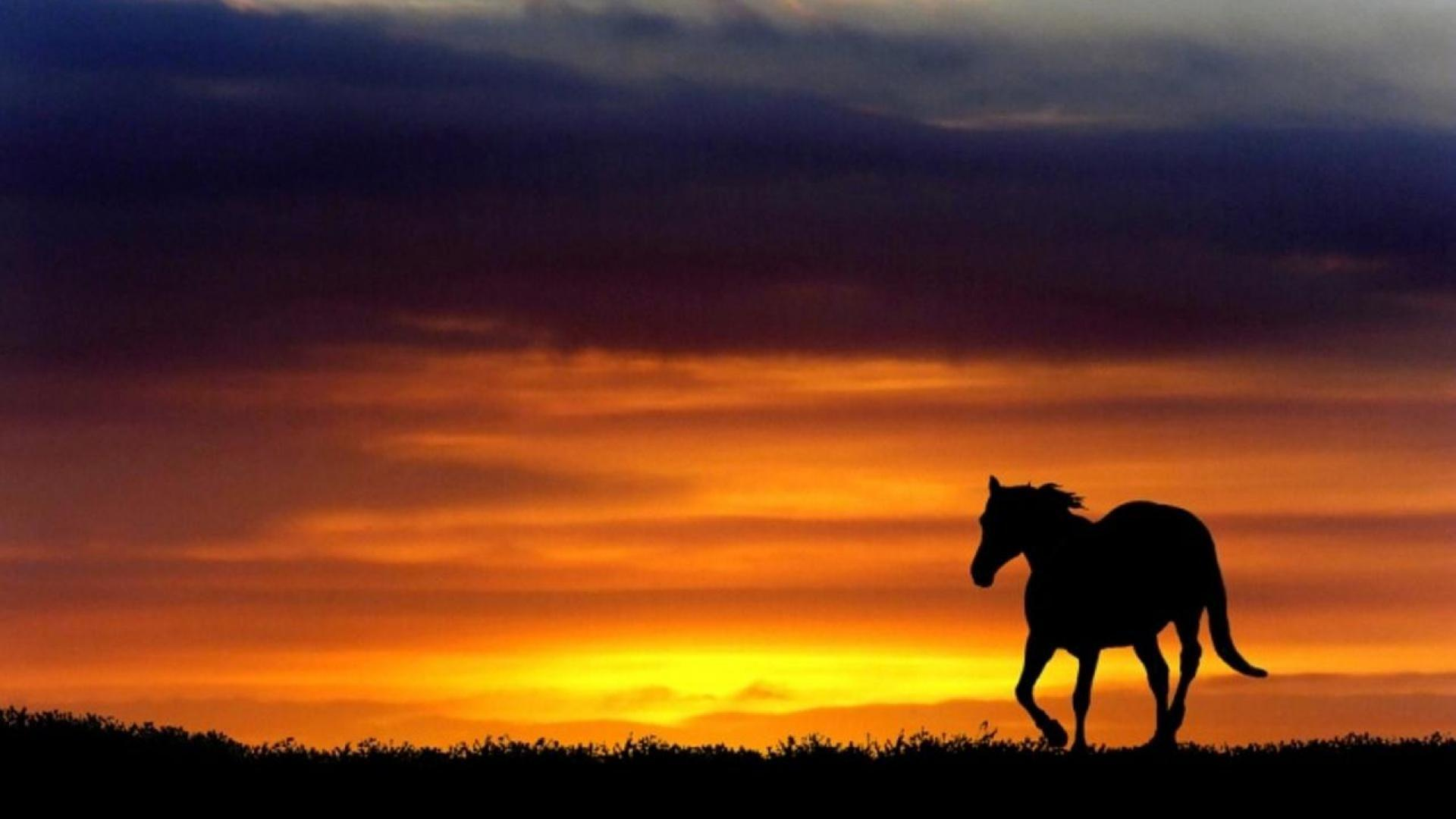 Horse Silhouette Wallpapers Wallpaper Cave