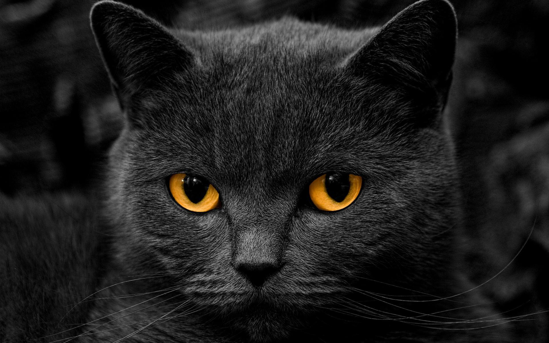 Black Cat Hd Wallpapers Wallpaper Cave