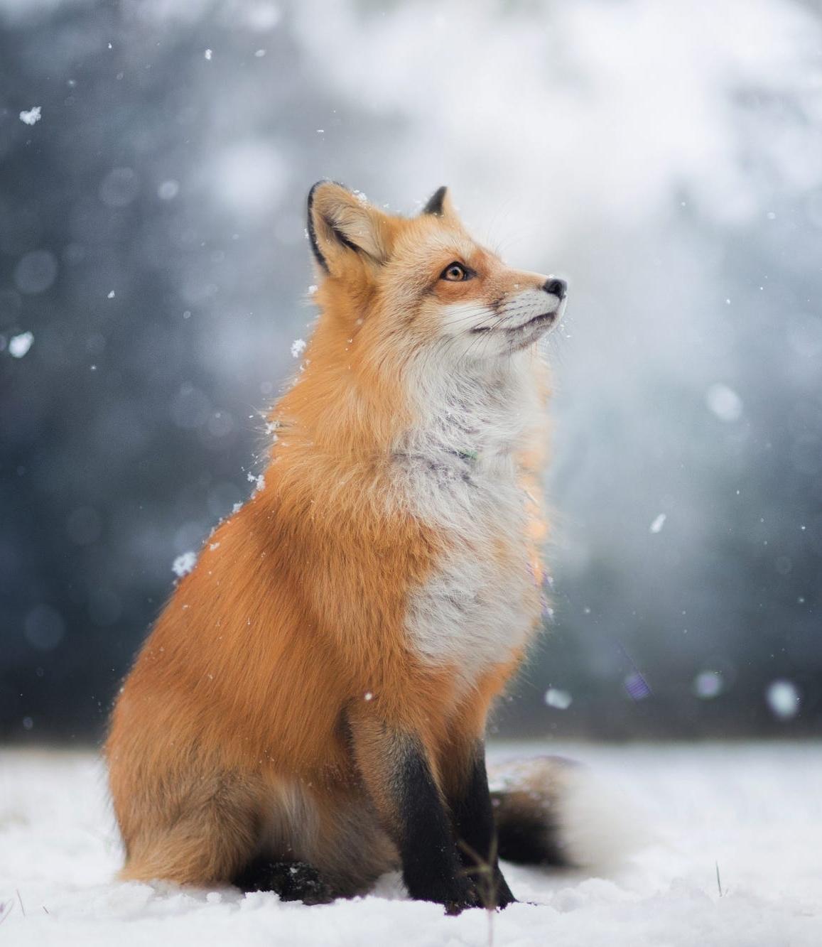 fox hd stream deutsch
