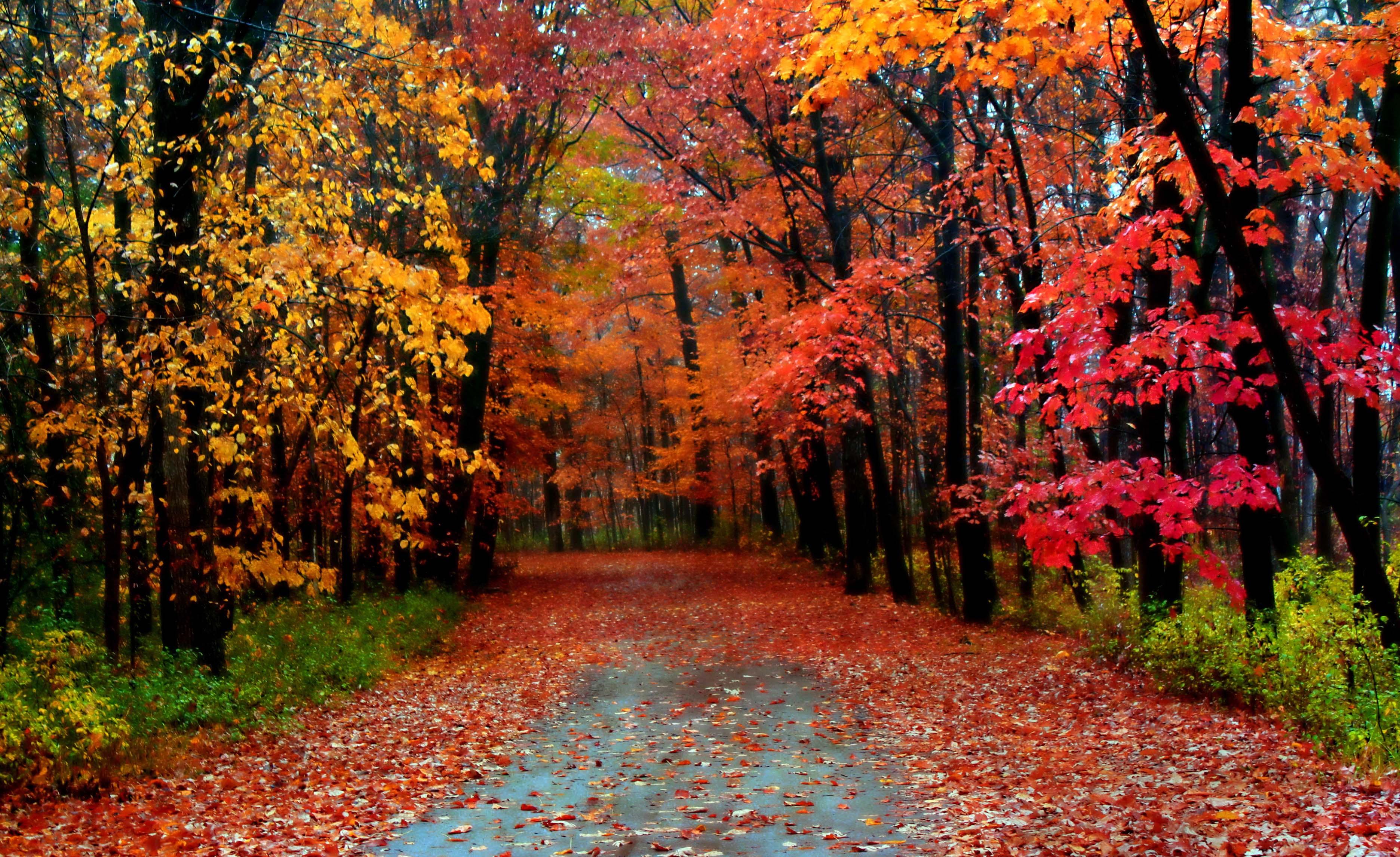autumn season - photo #14