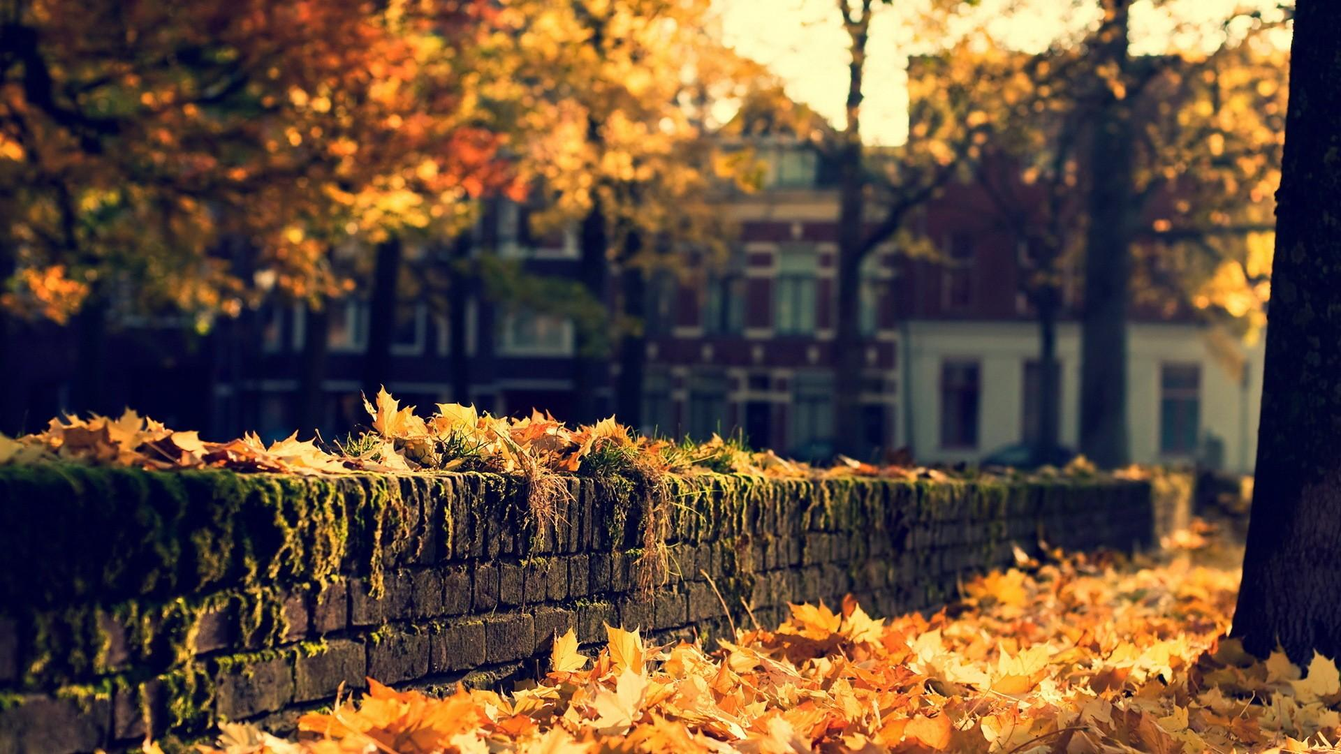 nature, Leaves, Autumn, Fall, Seasons, Trees, Wall, Stone