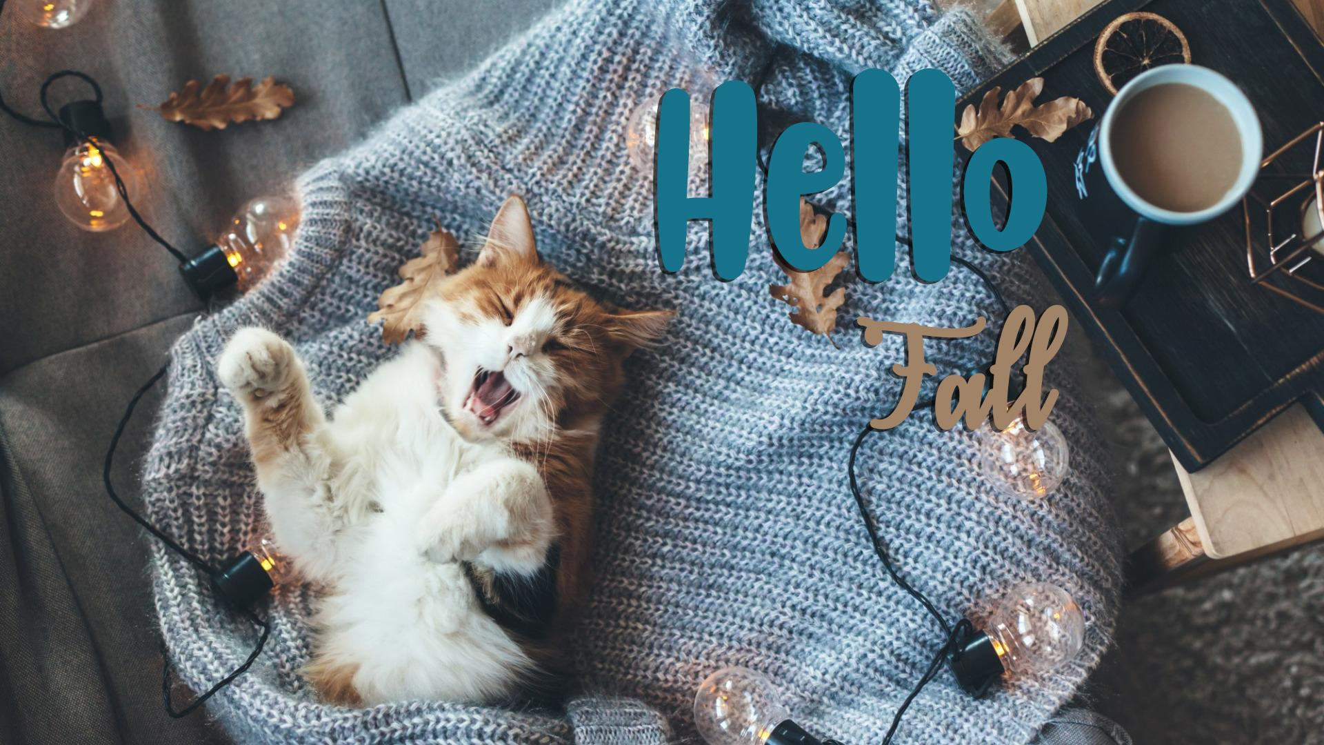 Cute new Hello Fall image