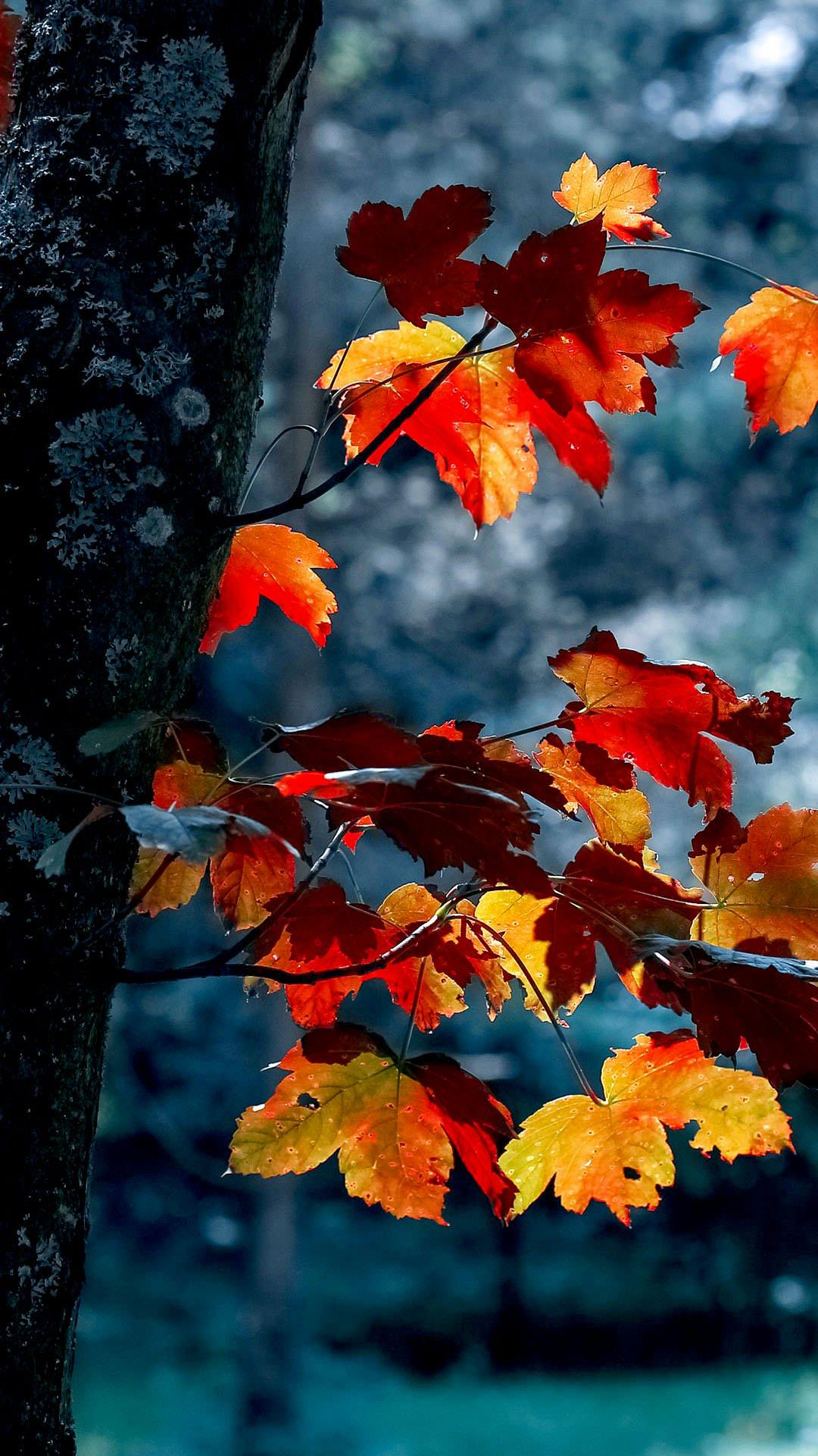 Autumn Aesthetic Wallpapers - Wallpaper Cave