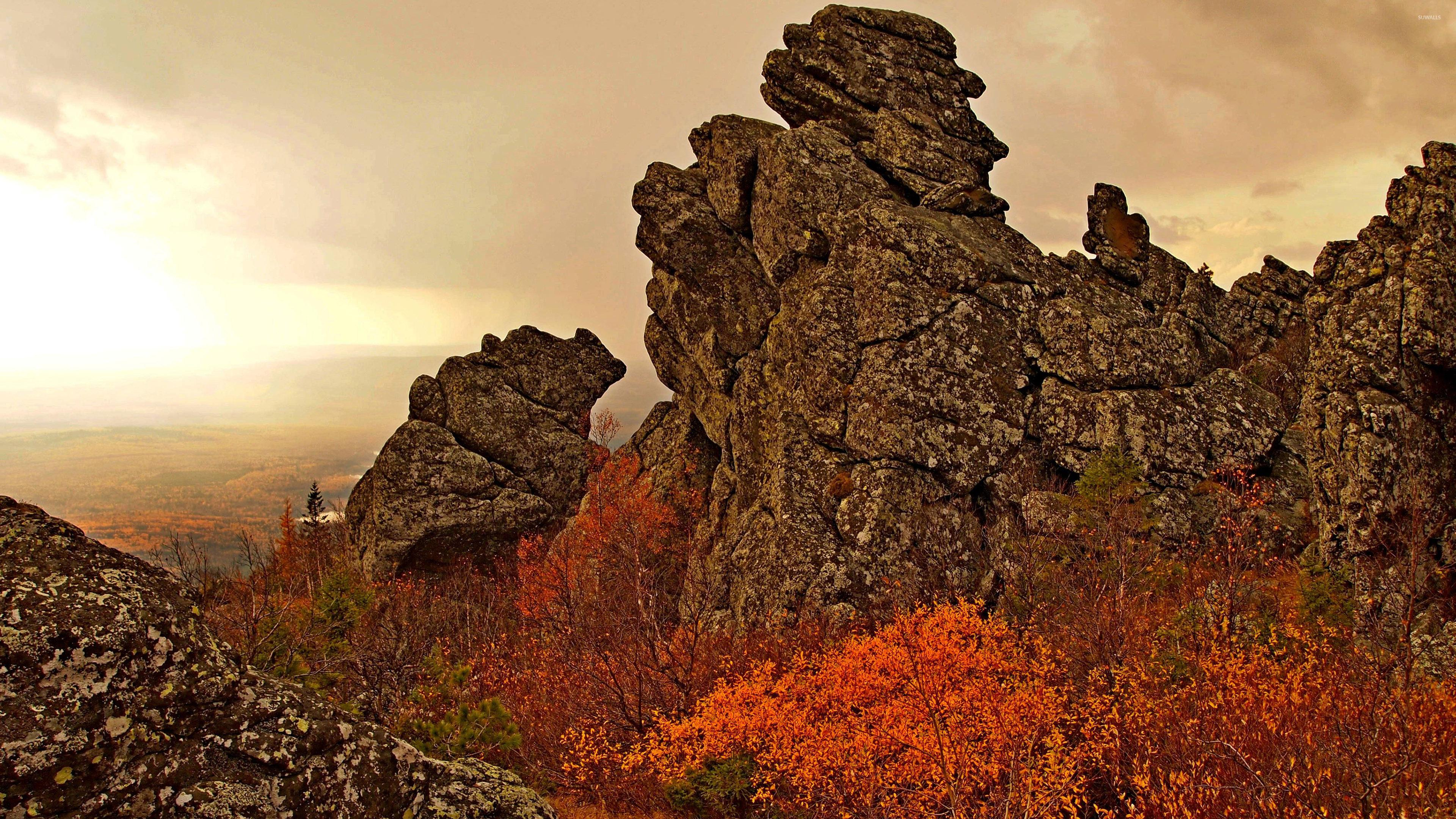Rusty trees on rocky cliff wallpapers