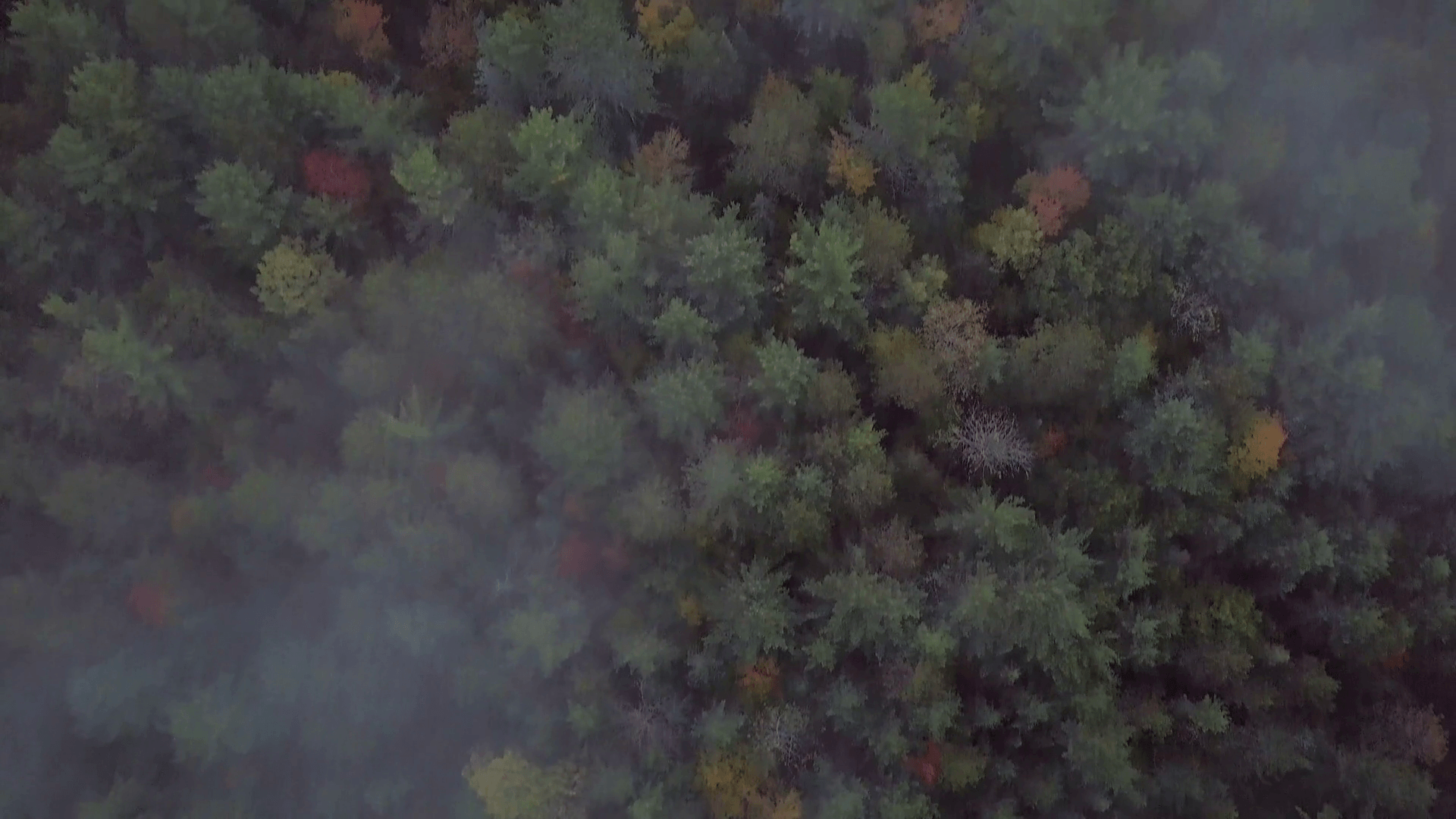 Aerial Sunrise Overhead Shot Of Fall Forest Colors Below Drifting Fog Clouds Tilts Up To Reveal Huge Tall Rocky Cliff And Sunlit Mist in Kawarthas