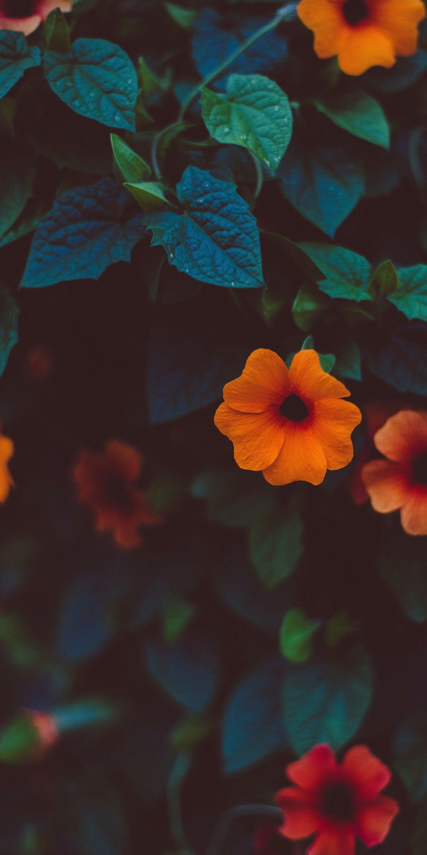 Flores Aesthetic Wallpapers, Screen Wallpaper, Mobile