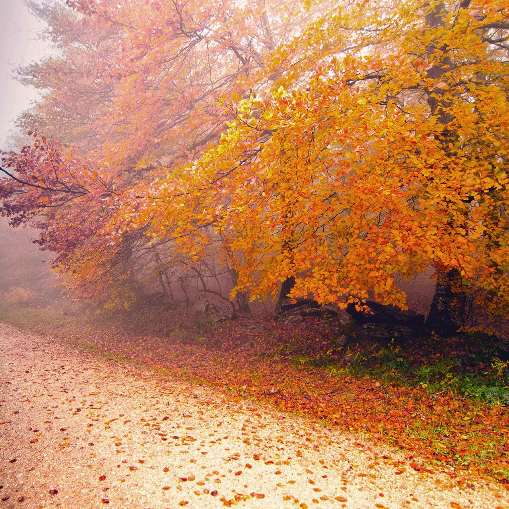 Autumn Morning Wallpapers