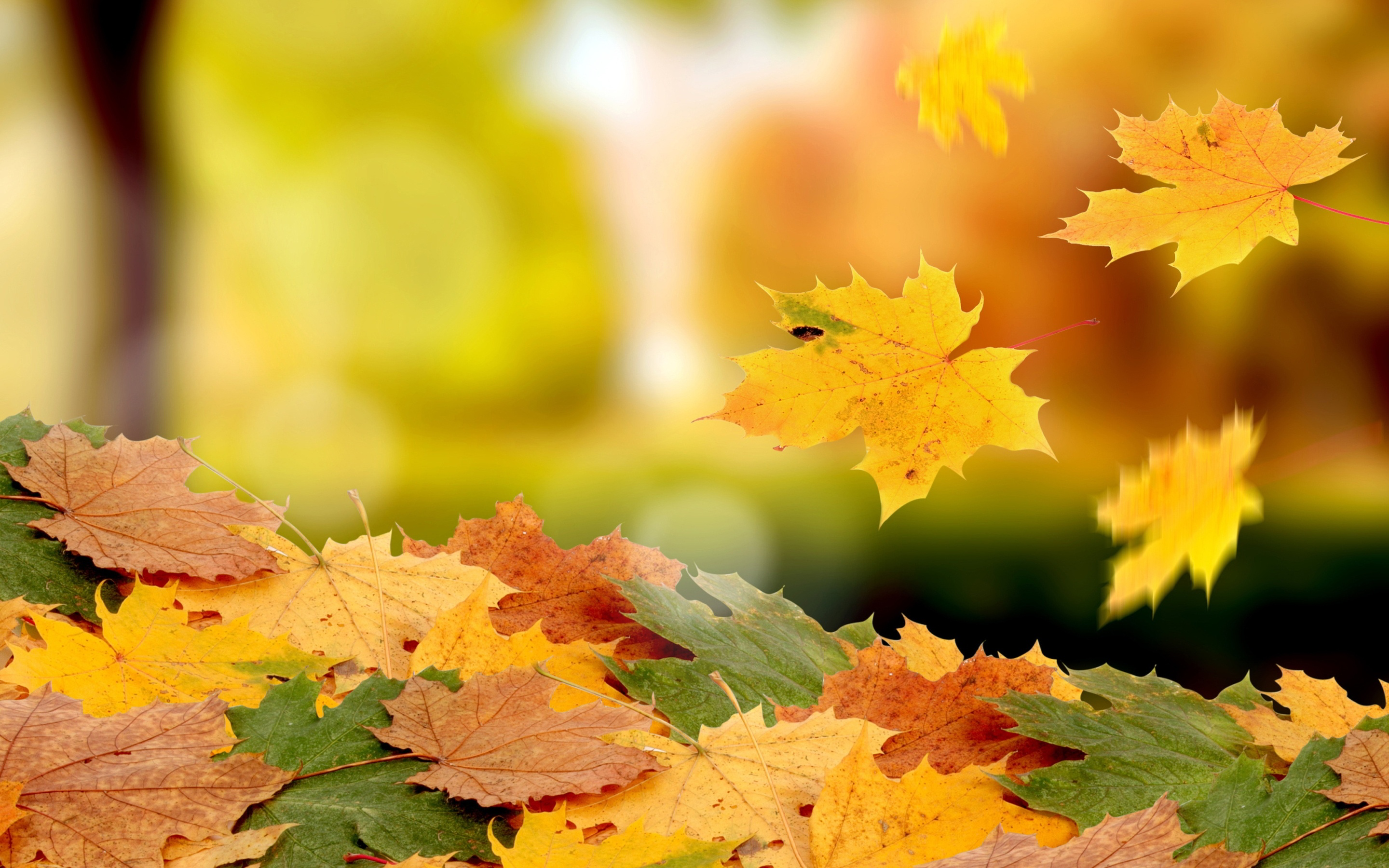 Golden Falling Leaves Wallpapers Wallpaper Cave