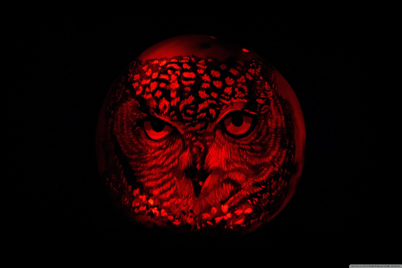 Halloween Owl Wallpapers Wallpaper Cave