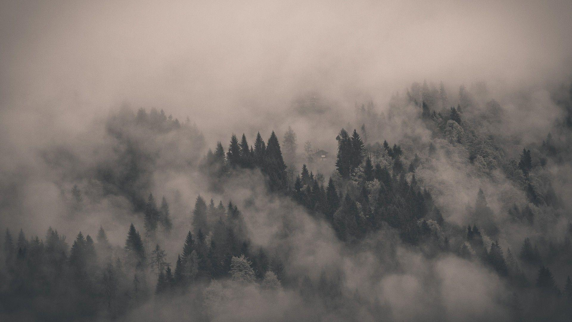 Misty Morning Forest Wallpapers Wallpaper Cave