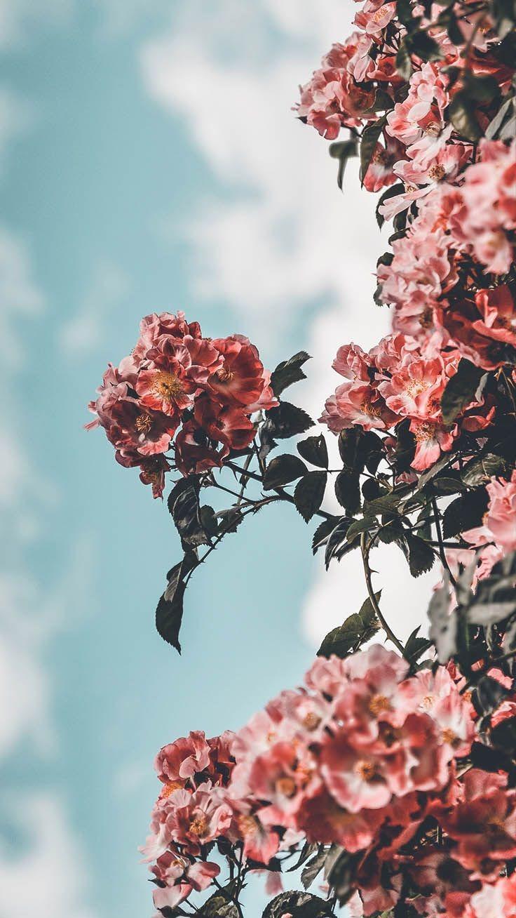 flower aesthetic wallpapers