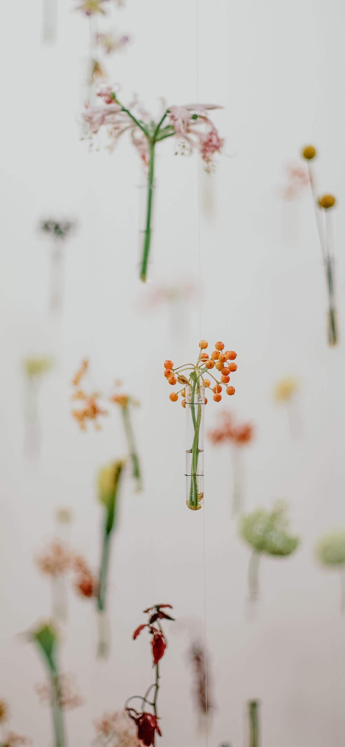 Succulent Iphone Xs Wallpapers Wallpaper Cave