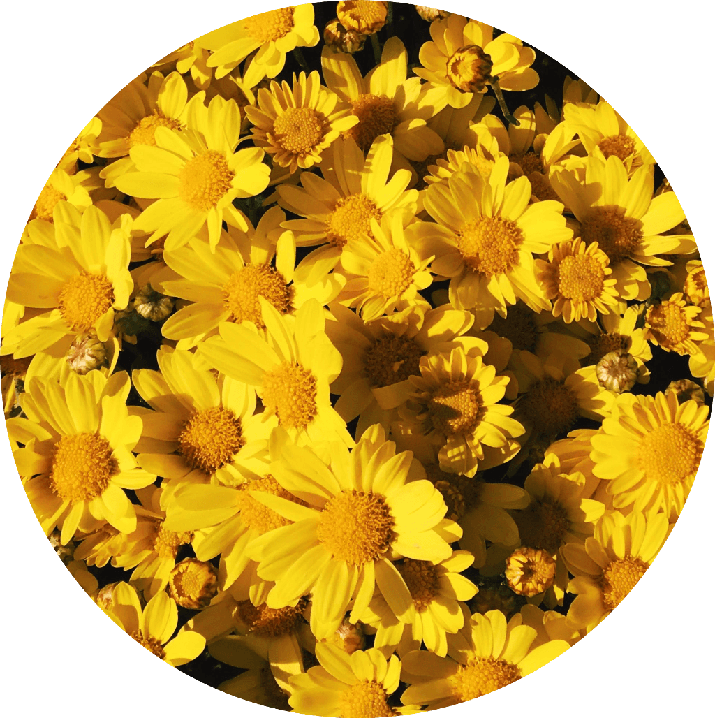 Yellow Circle Aesthetic Wallpapers Wallpaper Cave