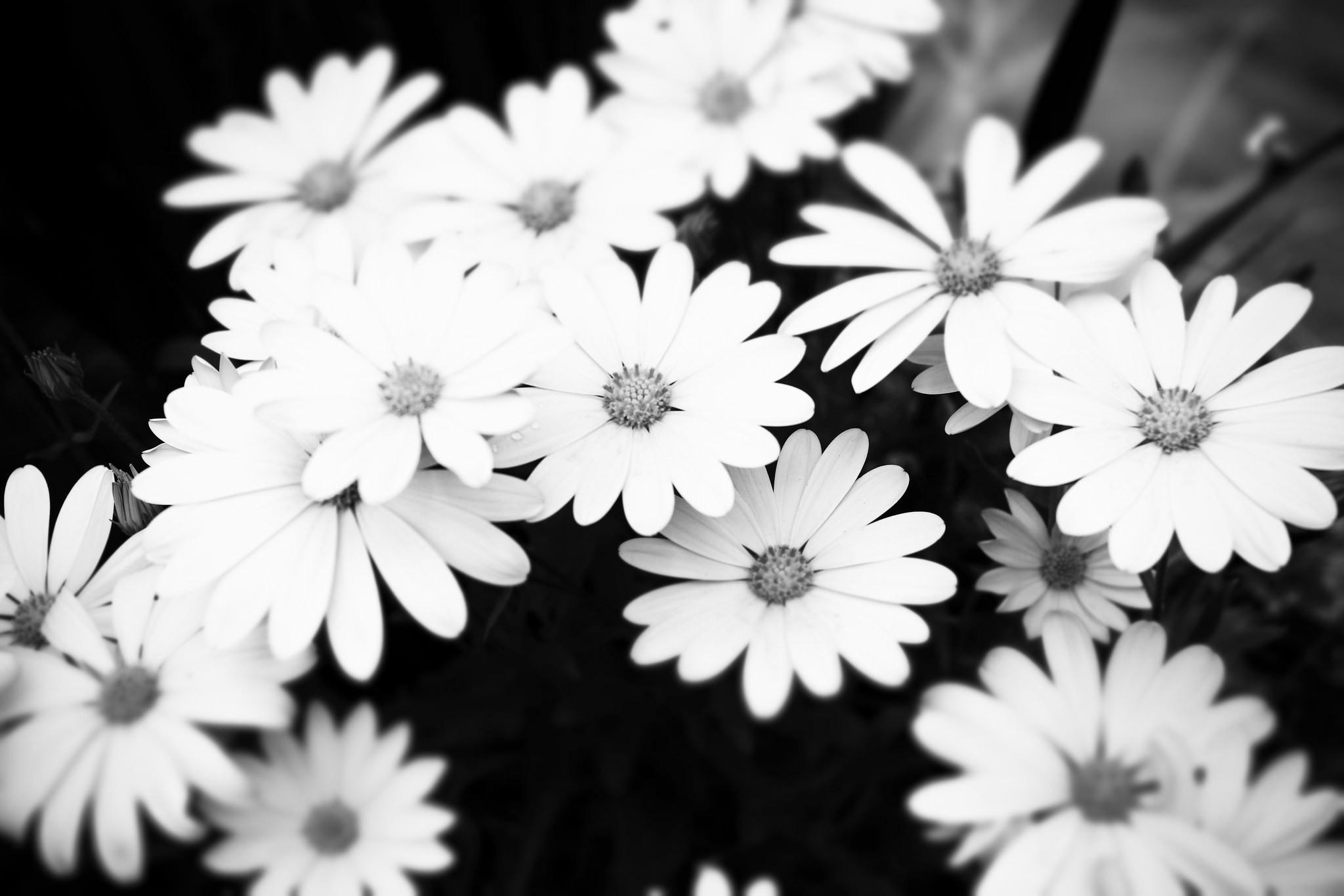 Aesthetic Wallpaper Flowers Black And White Largest Wallpaper Portal