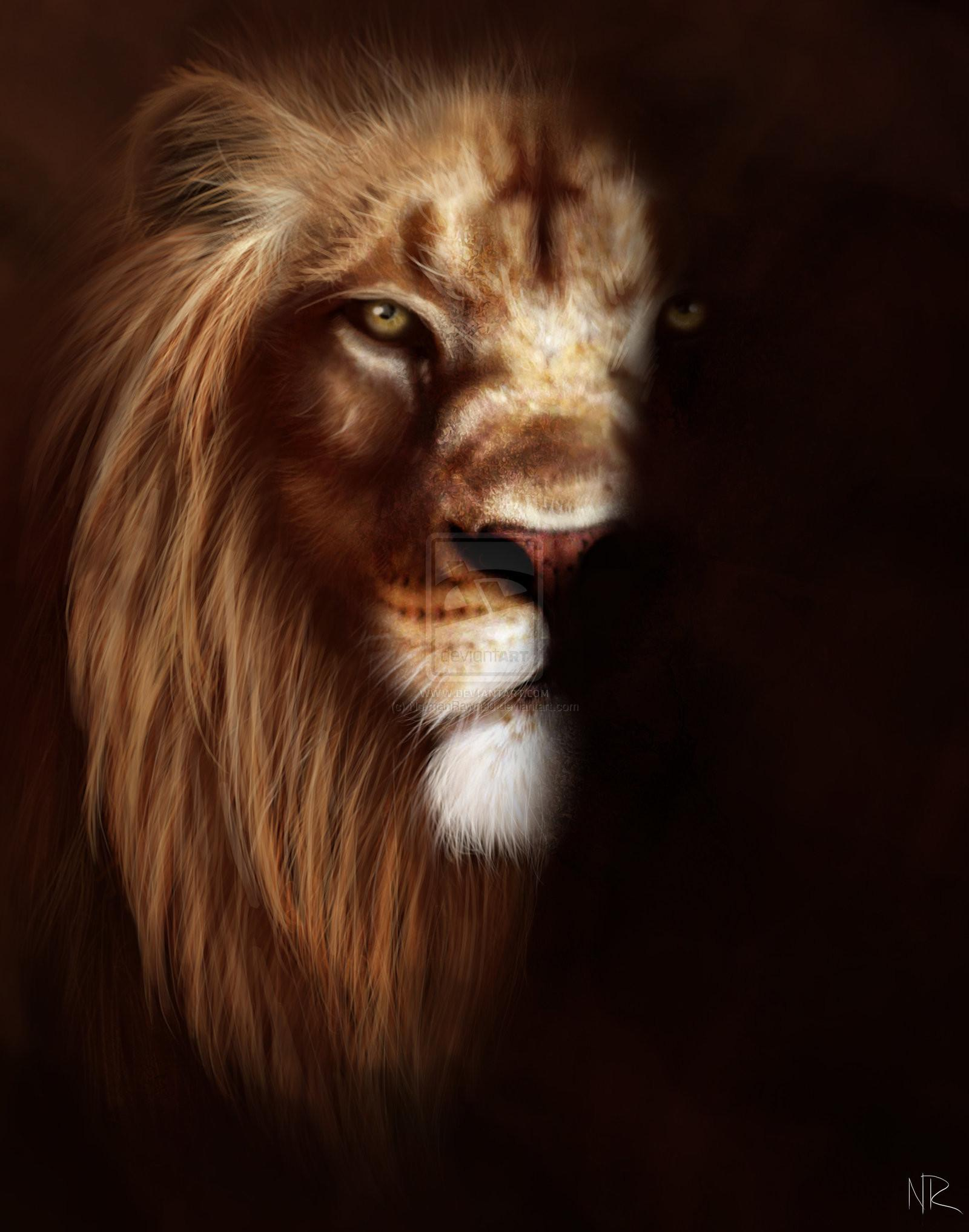 Angry Lion Wallpapers - Wallpaper Cave