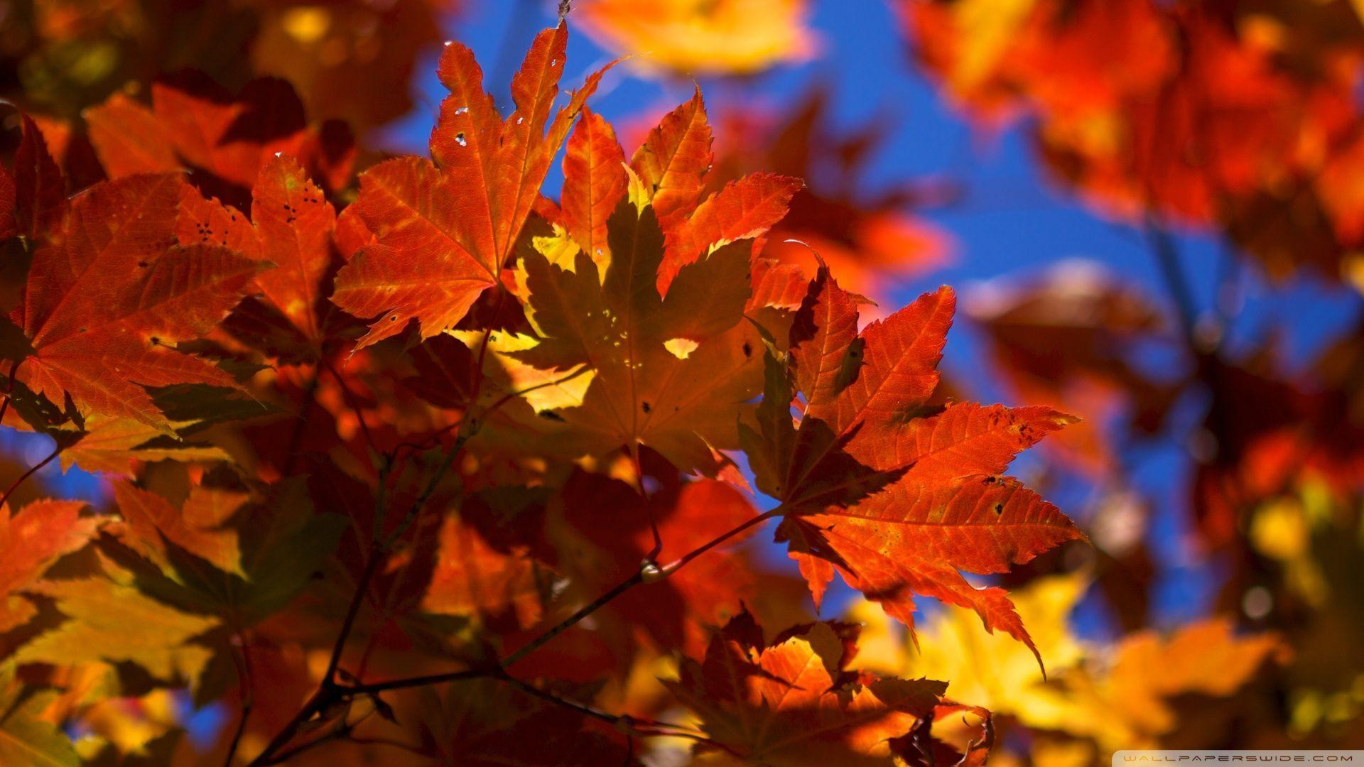 Leaves Autumn Wallpapers - Wallpaper Cave