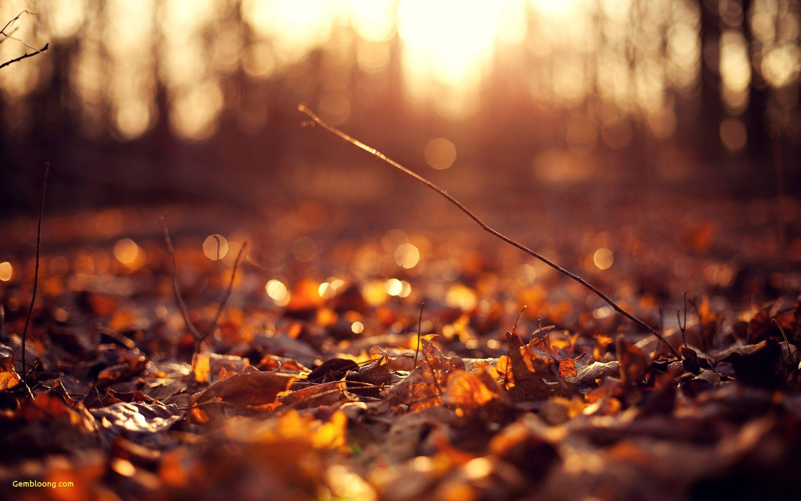 Leaves Autumn Wallpapers Wallpaper Cave