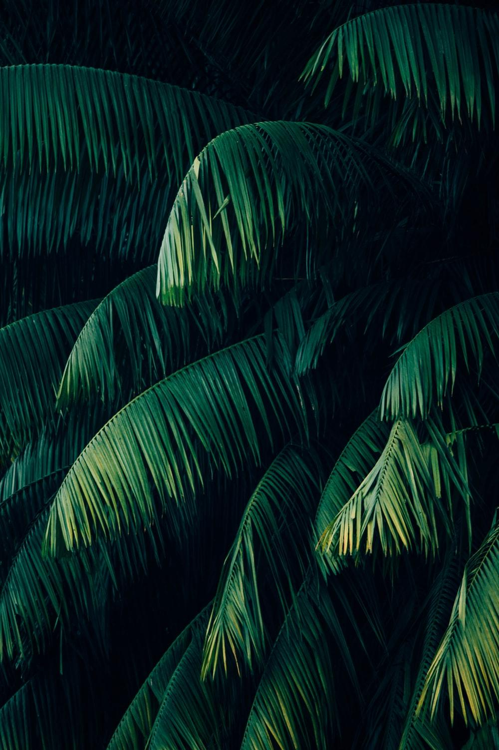 Tropical Leaf Wallpapers Wallpaper Cave 20934 tropical leaves wallpaper pbr texture seamless demo note: tropical leaf wallpapers wallpaper cave