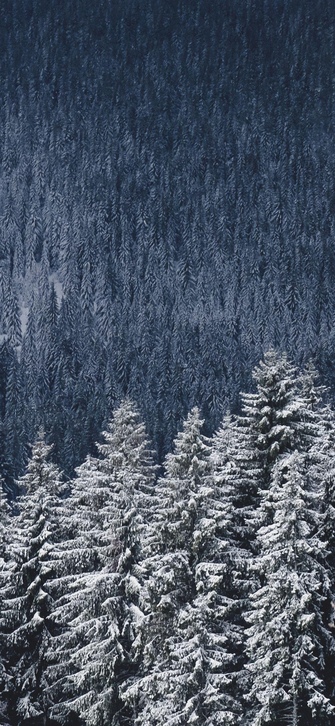 16 winter aesthetic wallpaper desktop