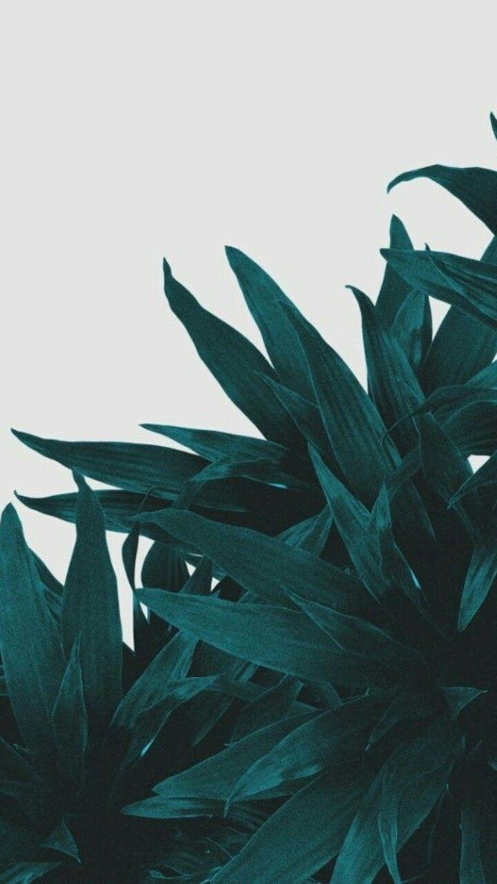 Cute Olive Green Iphone Wallpaper