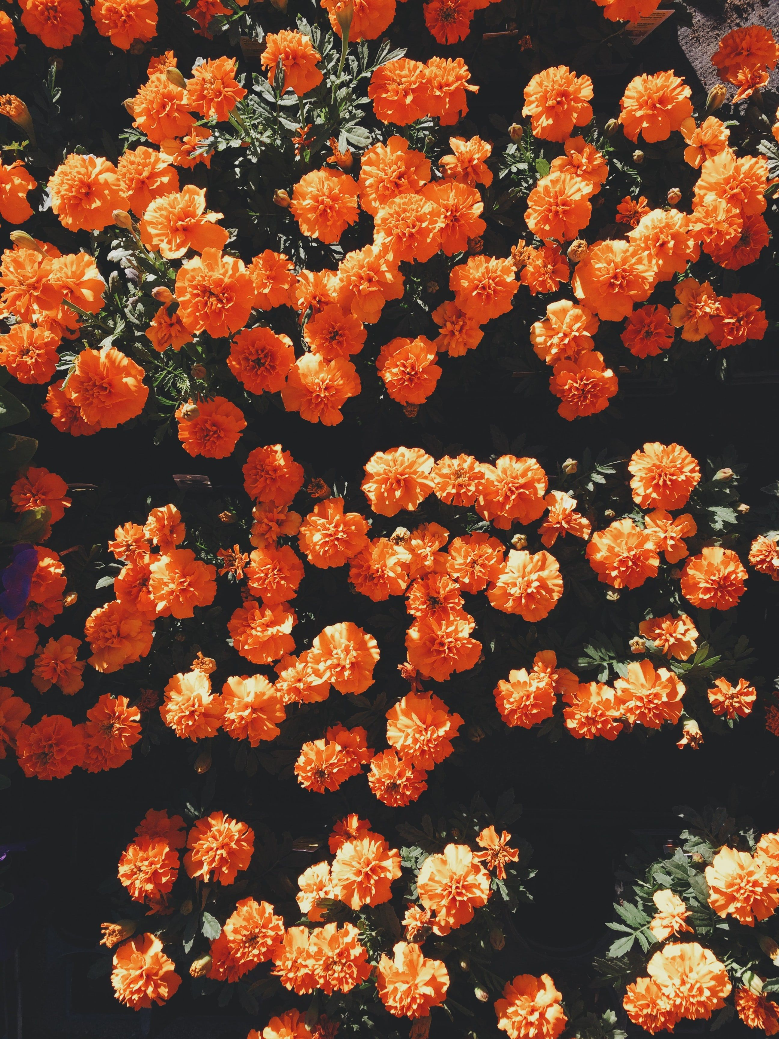 Aesthetic Floral HD Wallpapers - Wallpaper Cave