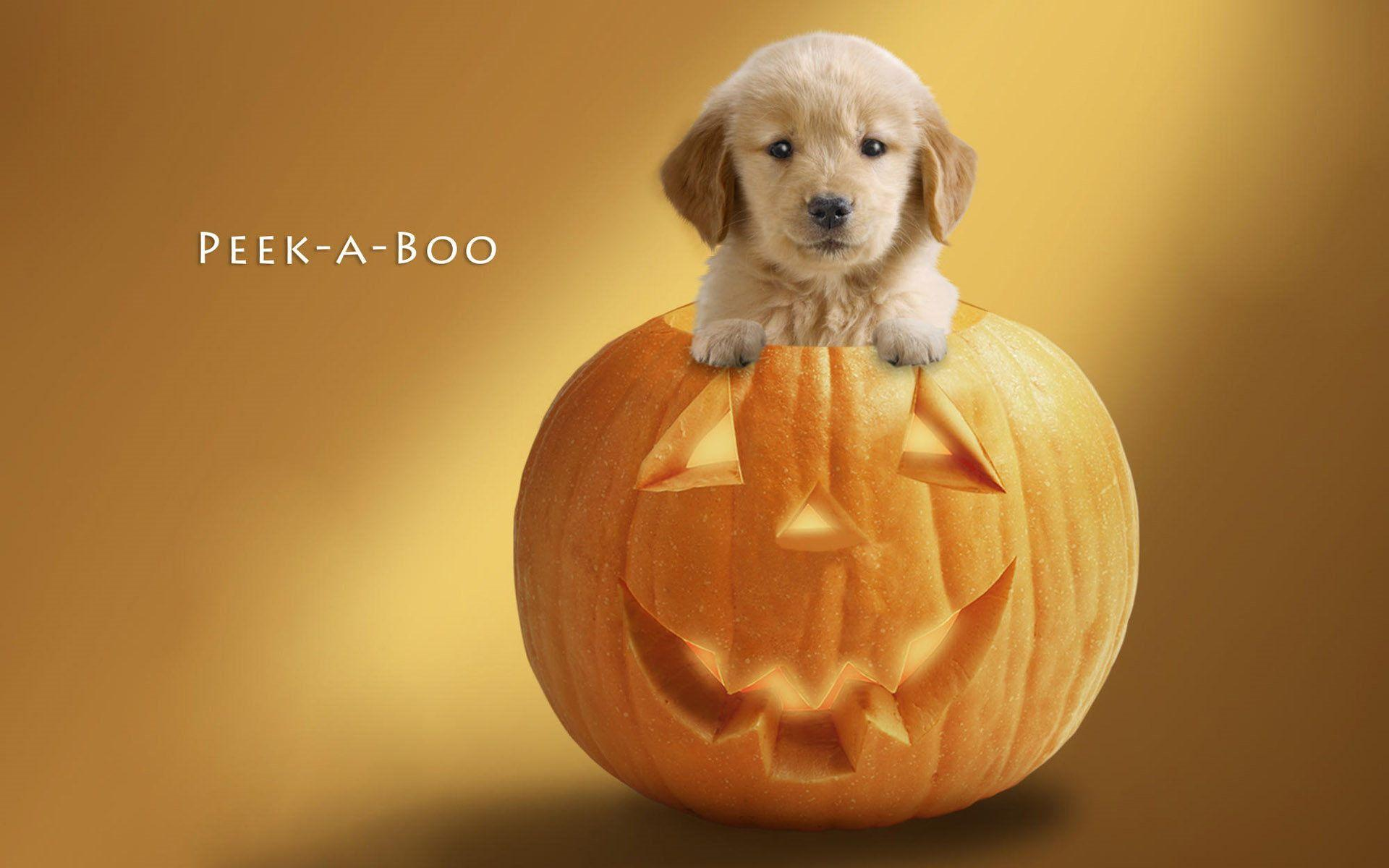 45+ Cute Puppy Halloween Wallpapers