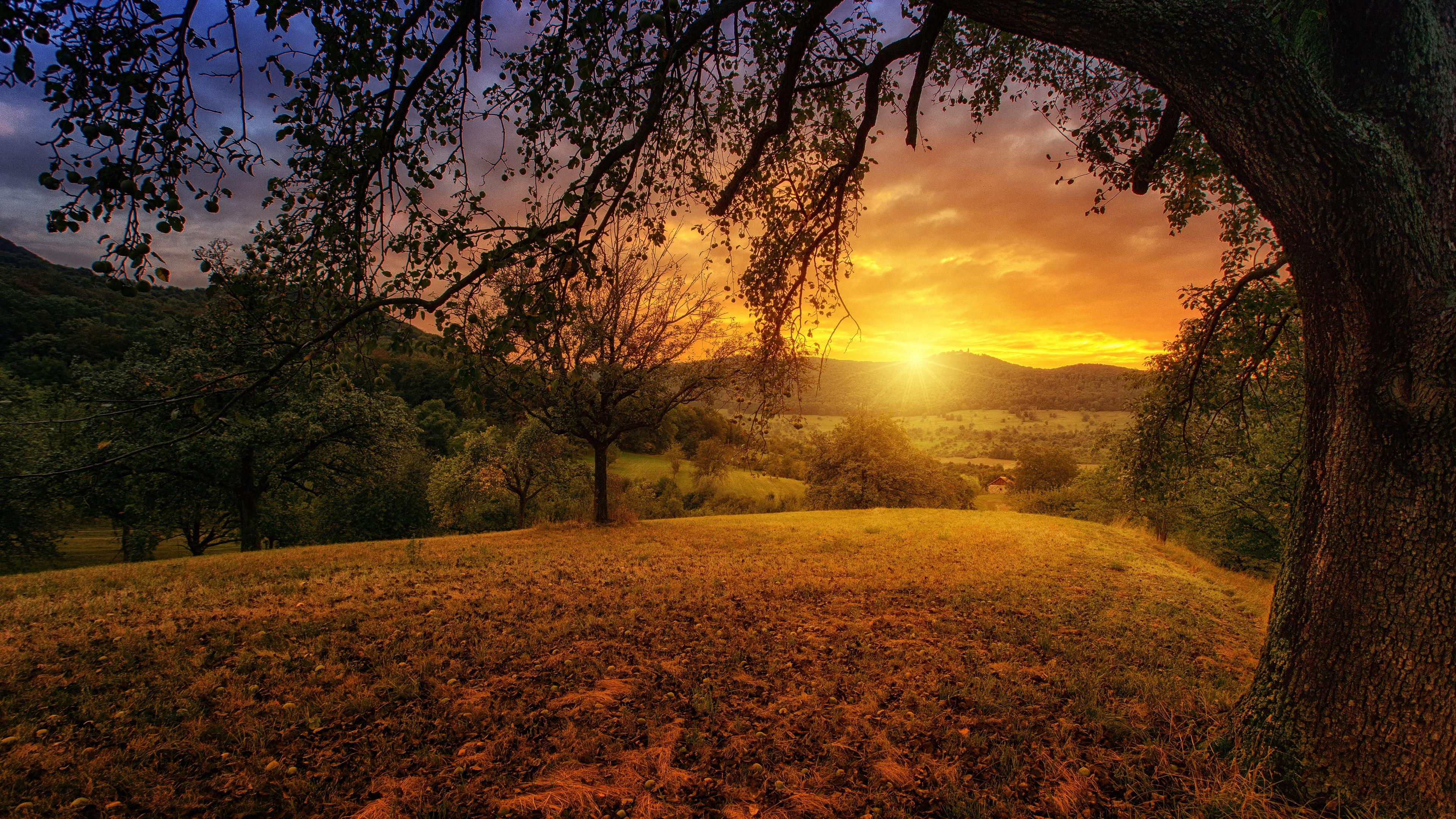 Wallpapers 4k Tree Sun Aesthetic Dawn Landscape Panorama 4k
