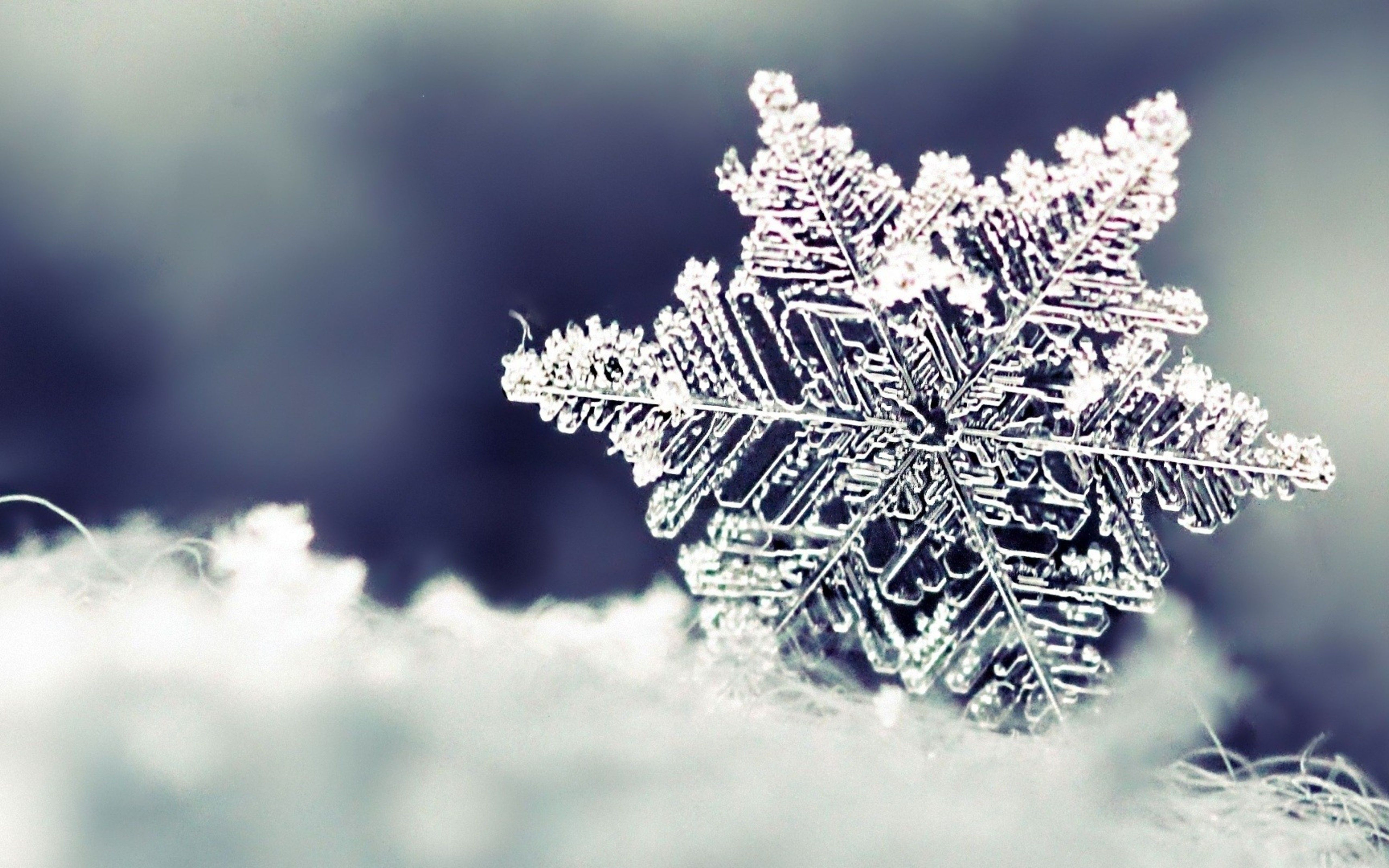 Wallpapers Download 5120x3200 Frozen snowflake