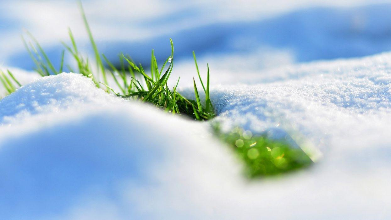 Winter snow grass macro wallpapers