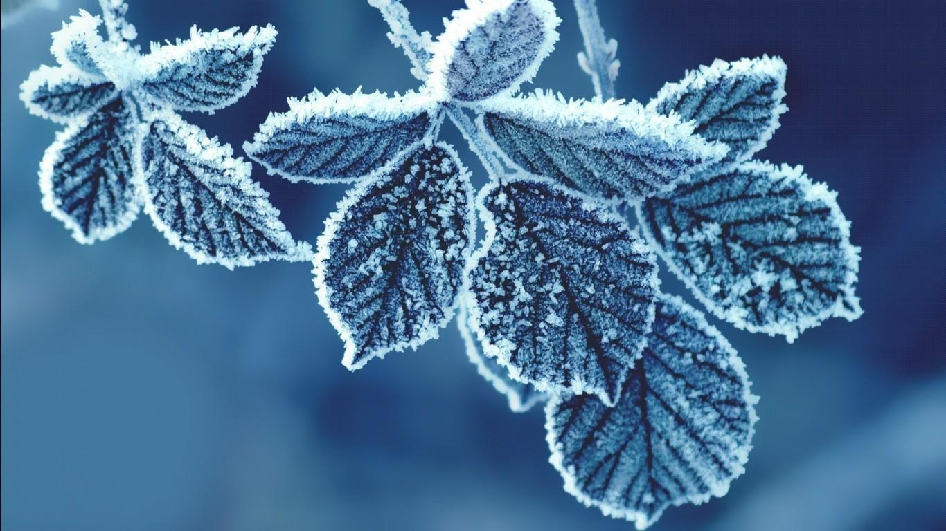 Leaves Freezing Macro HD Wallpapers. Download Desktop