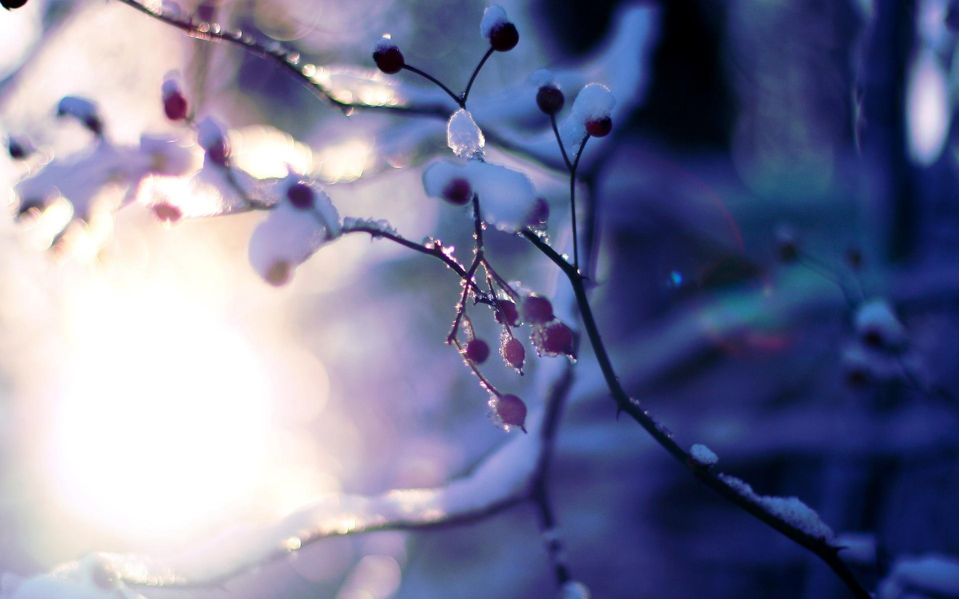 Macro tree plant snow winter tree trees branches sun bokeh