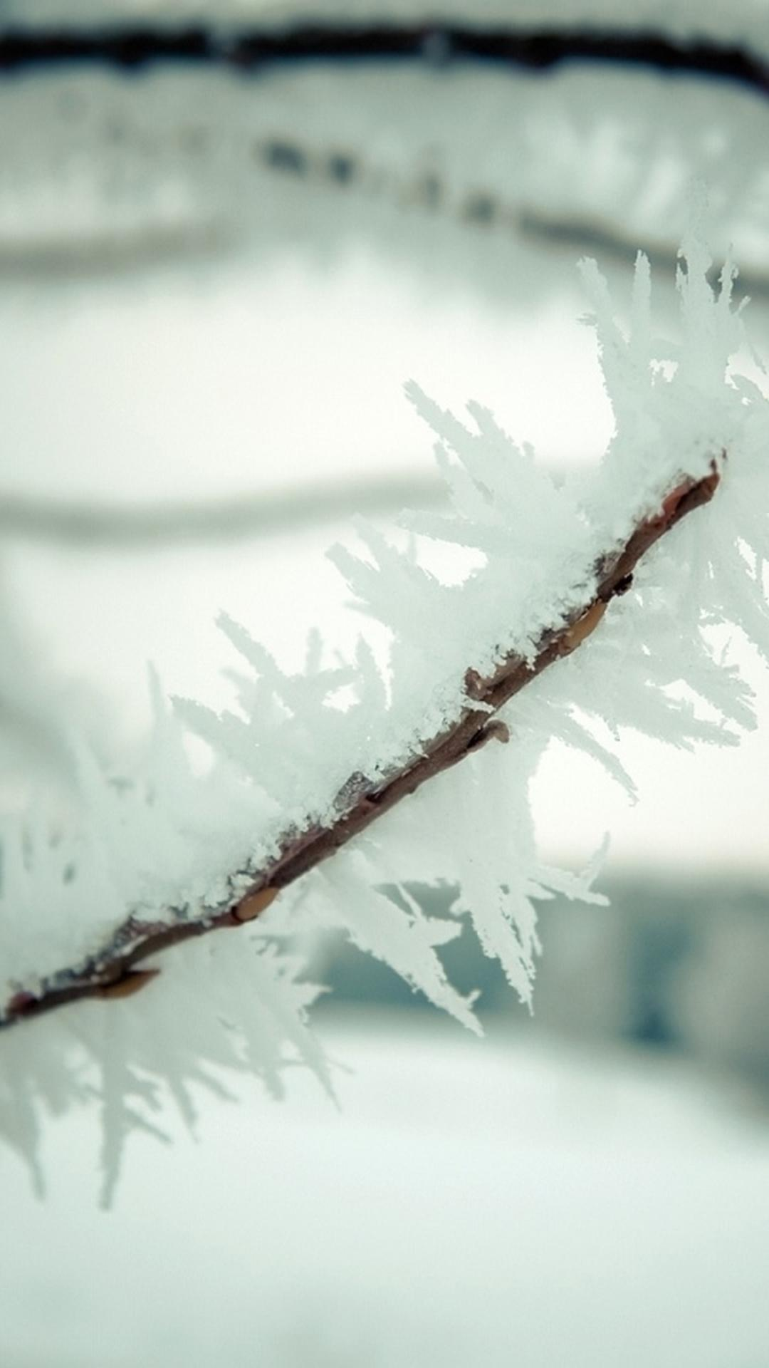 Cold Winter ICy Plant Branch Macro iPhone 8 Wallpapers Free