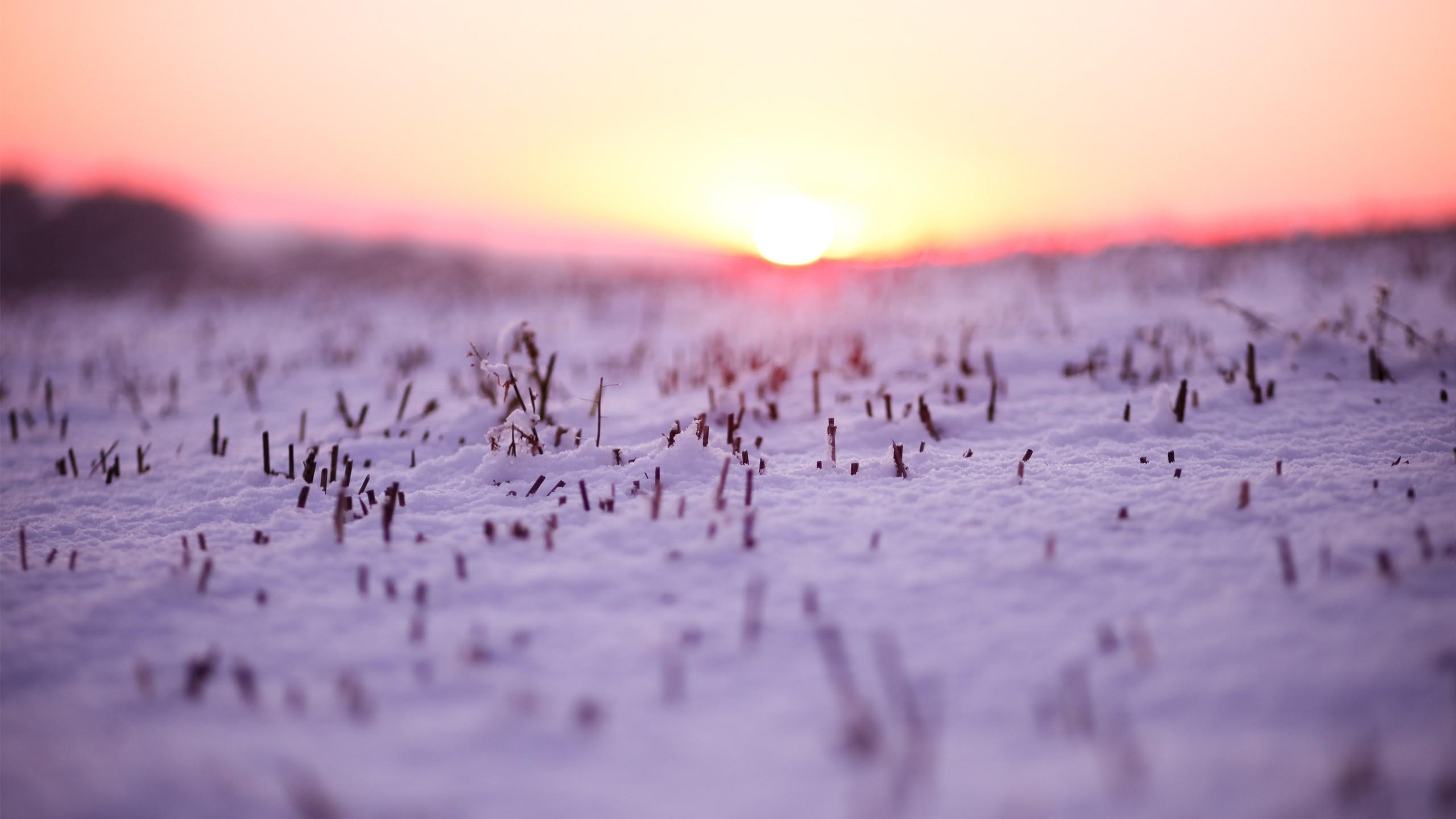 sunset, Landscapes, Nature, Winter, season , Snow, Macro
