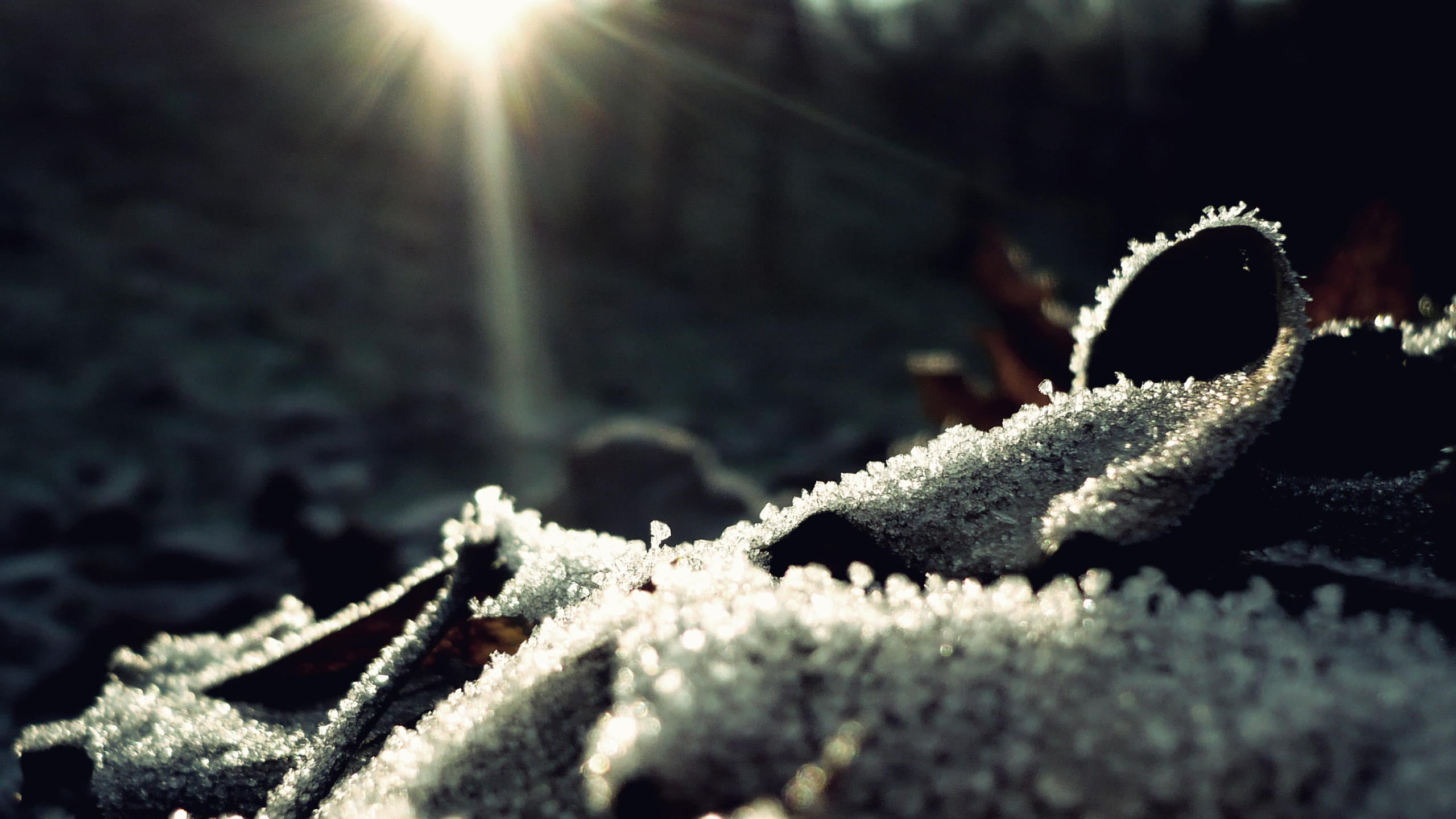 nature, winter, macro :: Wallpapers