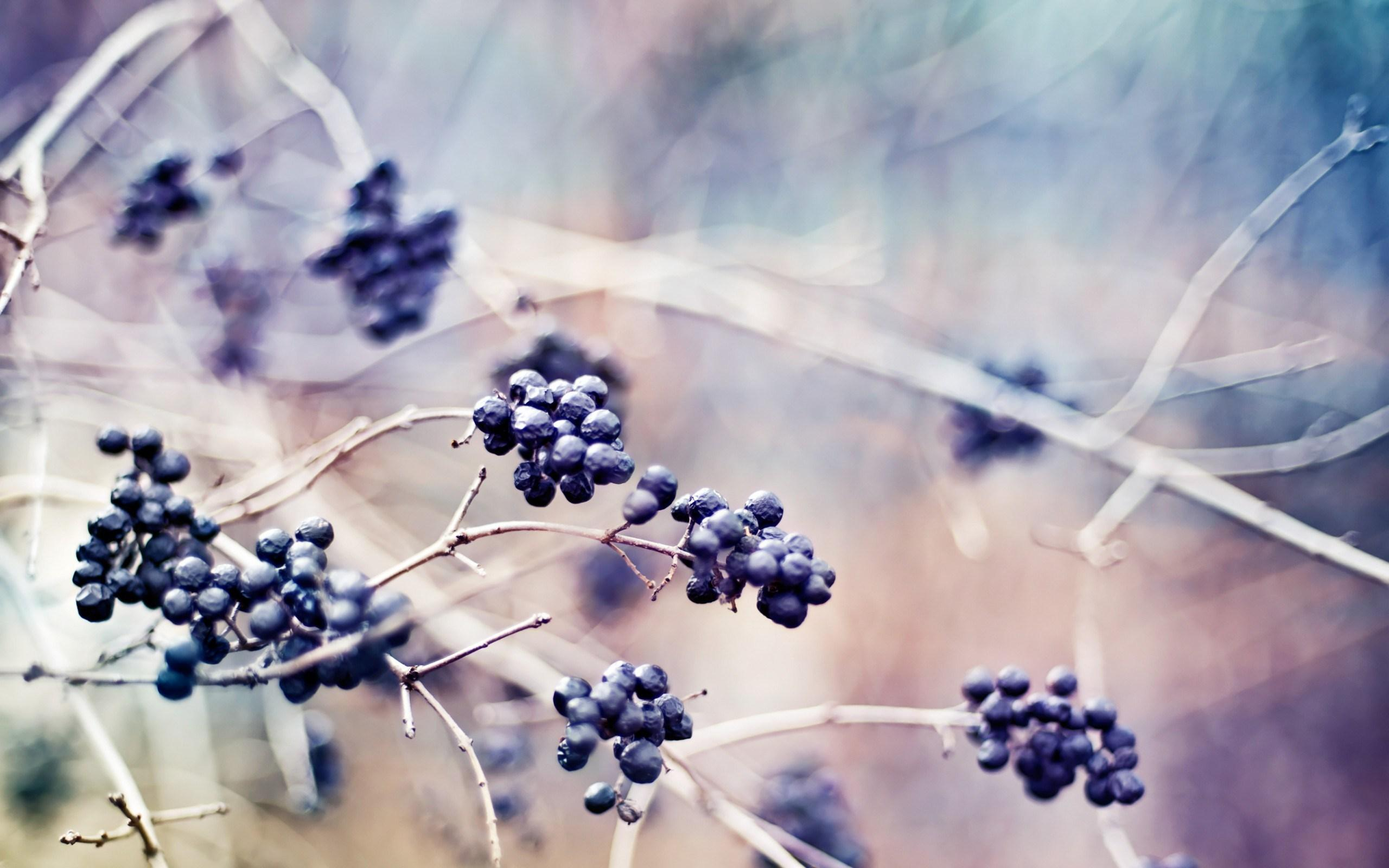 Berries Plants Branches Nature Macro Photo wallpapers