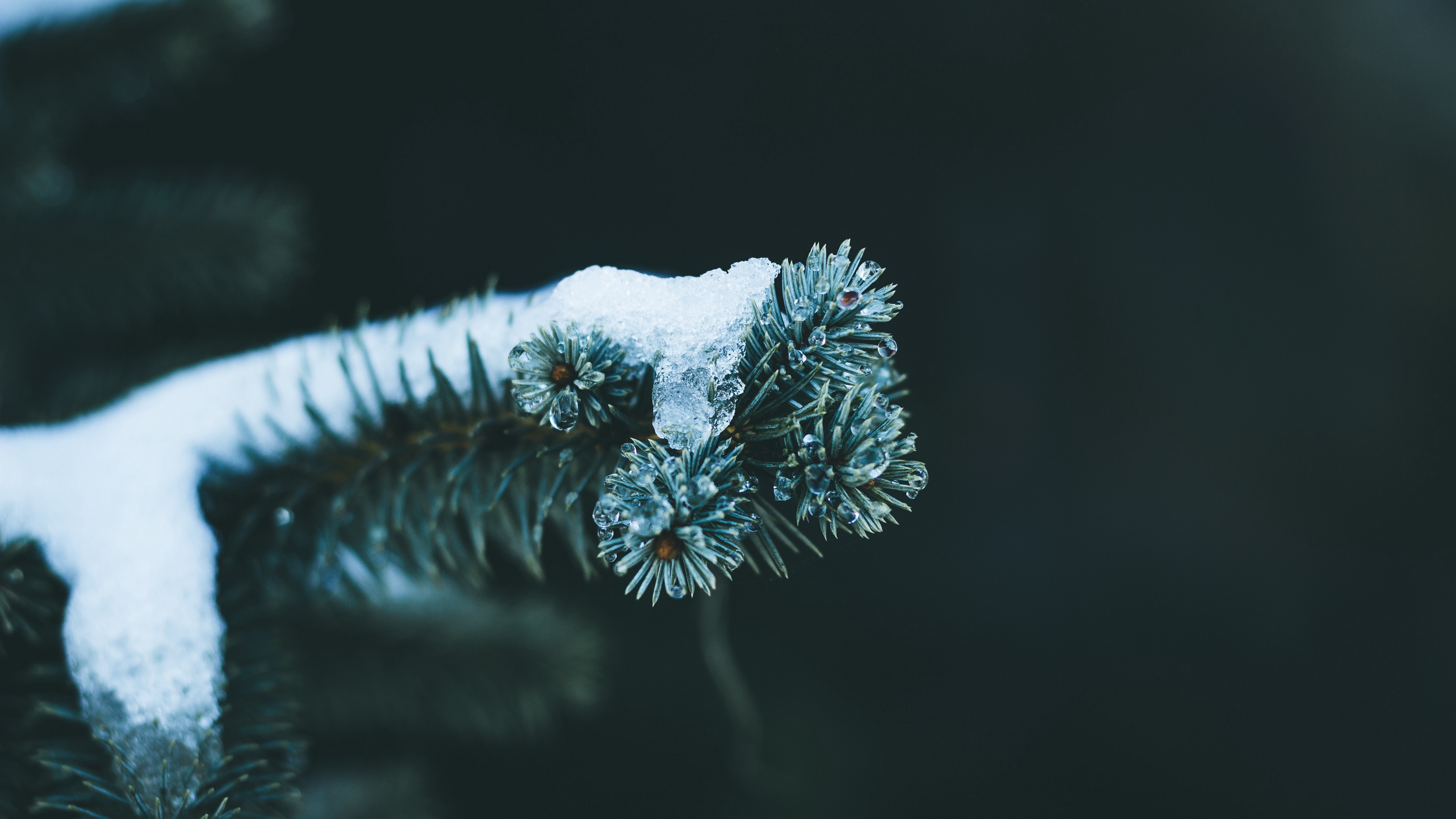 Download wallpapers 3840x2160 branch, spruce, snow, winter