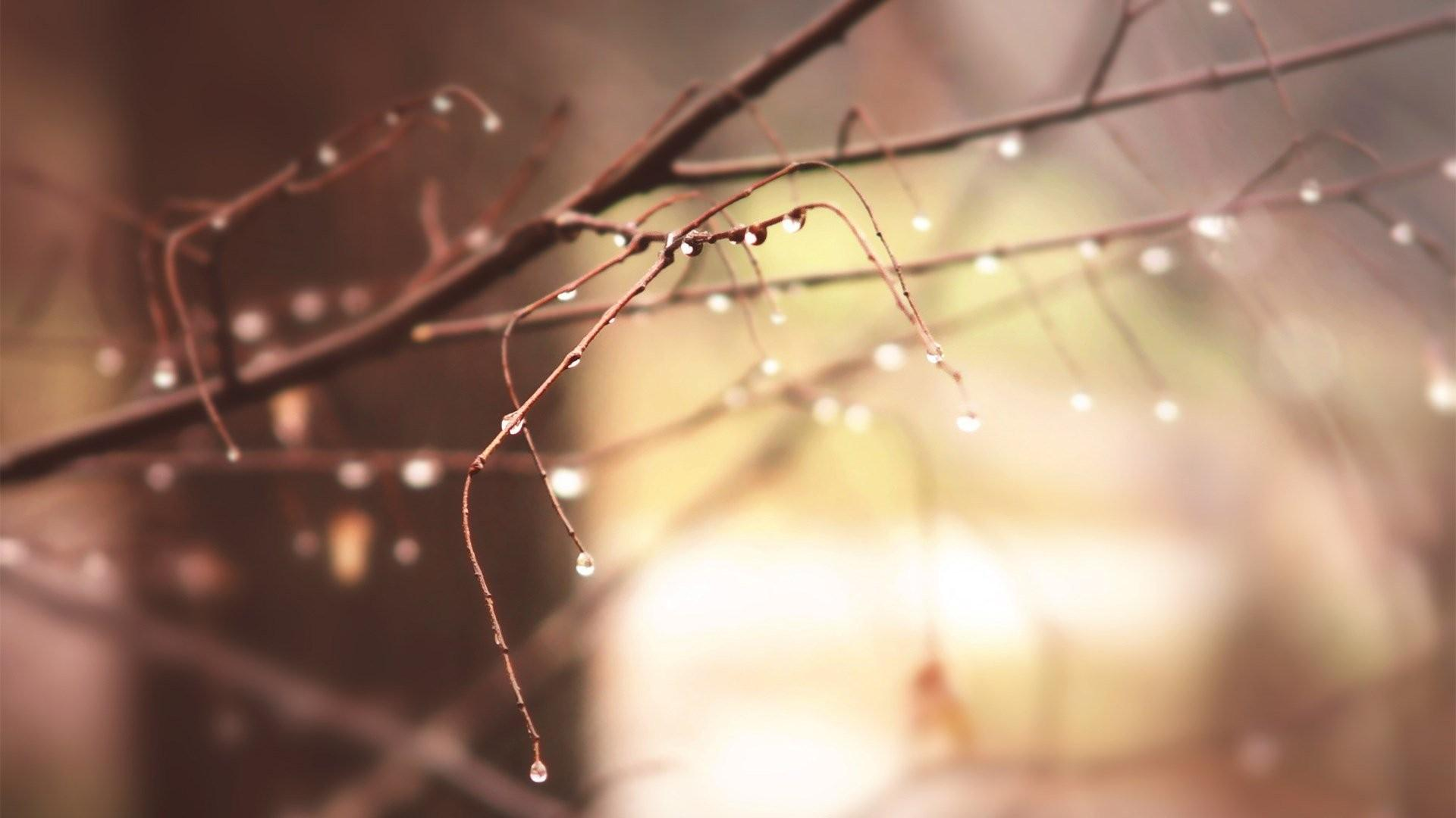 Dawn, Winter, Background, Closeup, Macro, Morning, Cool