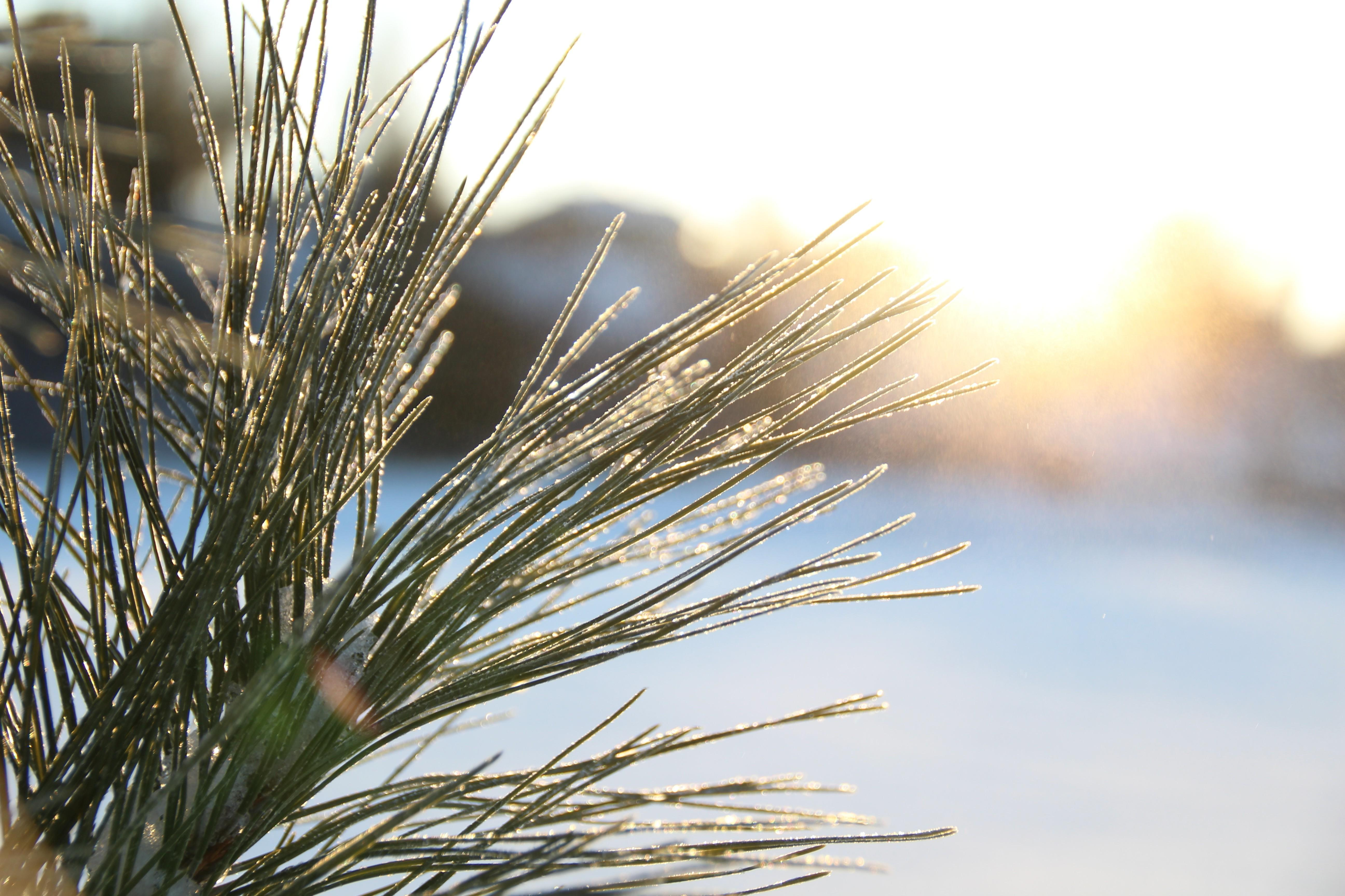 winter, Sunlight, Macro, Depth Of Field, Nature, Grass, Lens