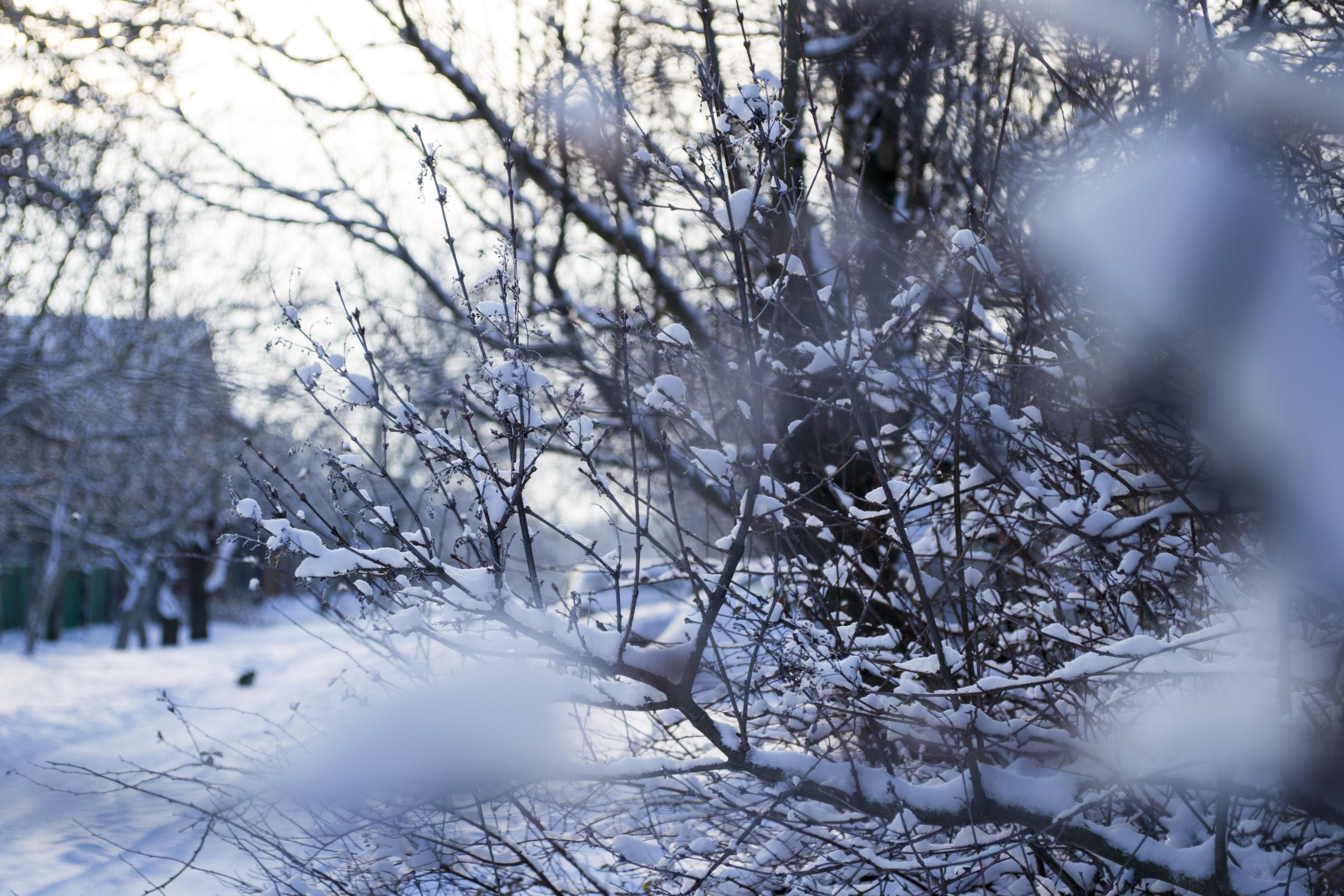 2943568 winter snow seasons nature frost macro wallpapers and