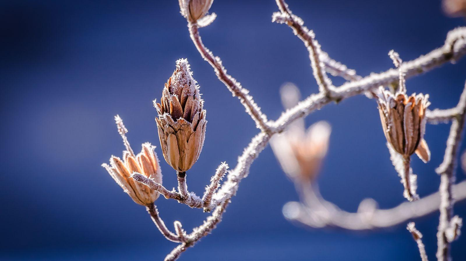 Nature Macro Winter Cold Wallpapers