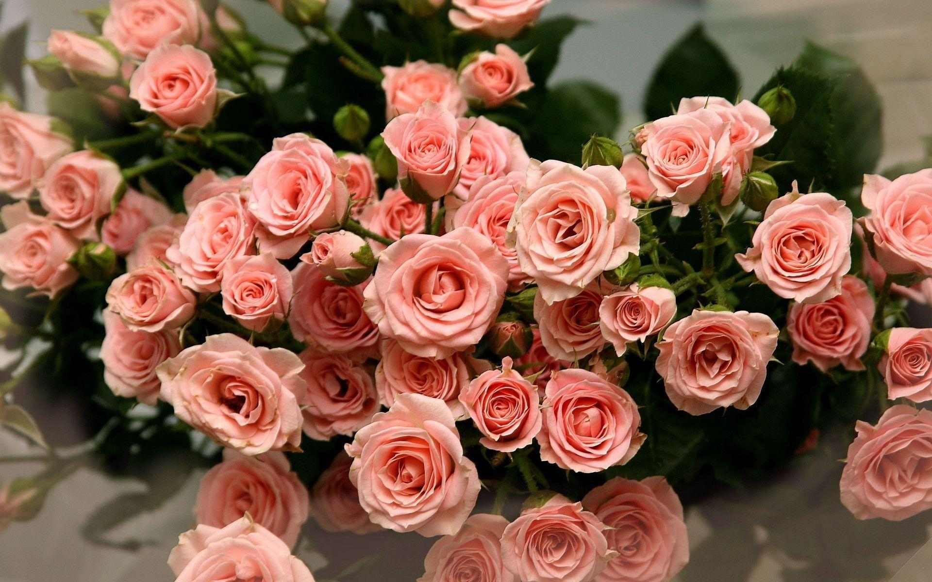 Aesthetic Pink Roses Wallpapers - Wallpaper Cave