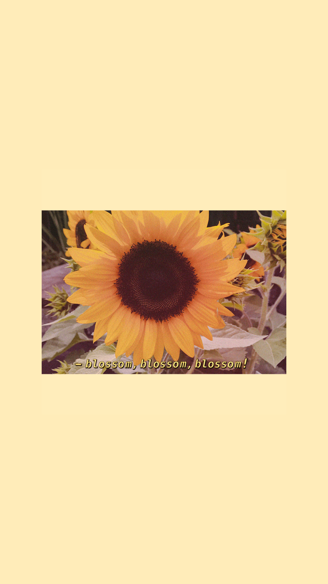 bloom sunflower iPhone wallpapers aesthetic tumblr art hoe yellow