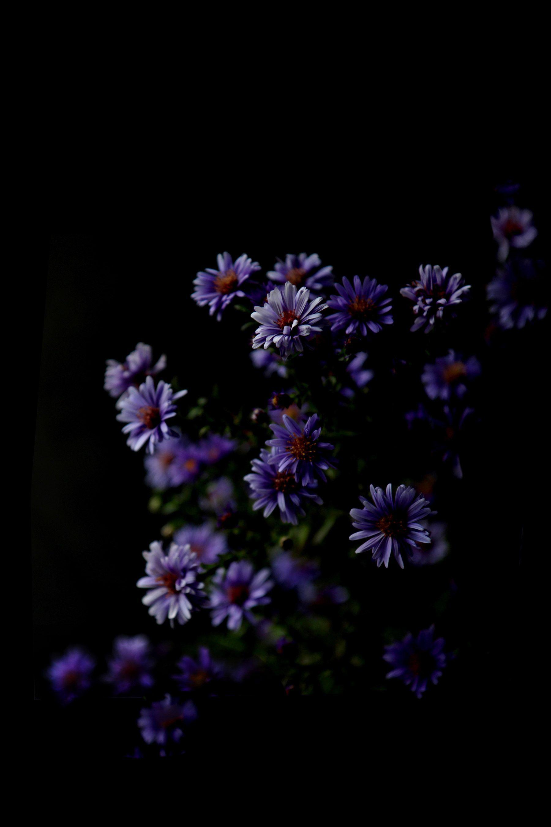 Flower Aesthetic Dark Wallpapers - Wallpaper Cave