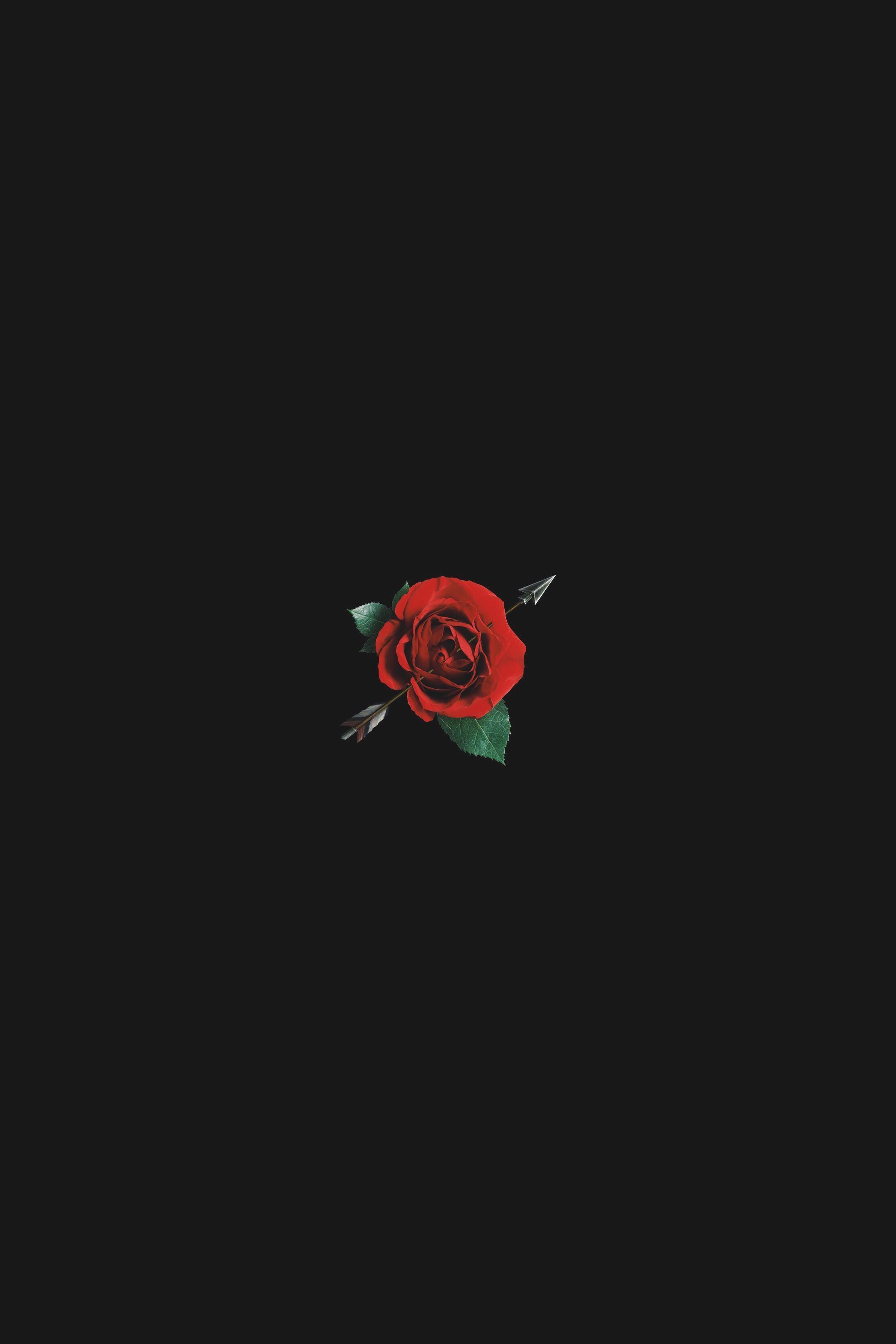 Aesthetic Black Rose Wallpapers Wallpaper Cave