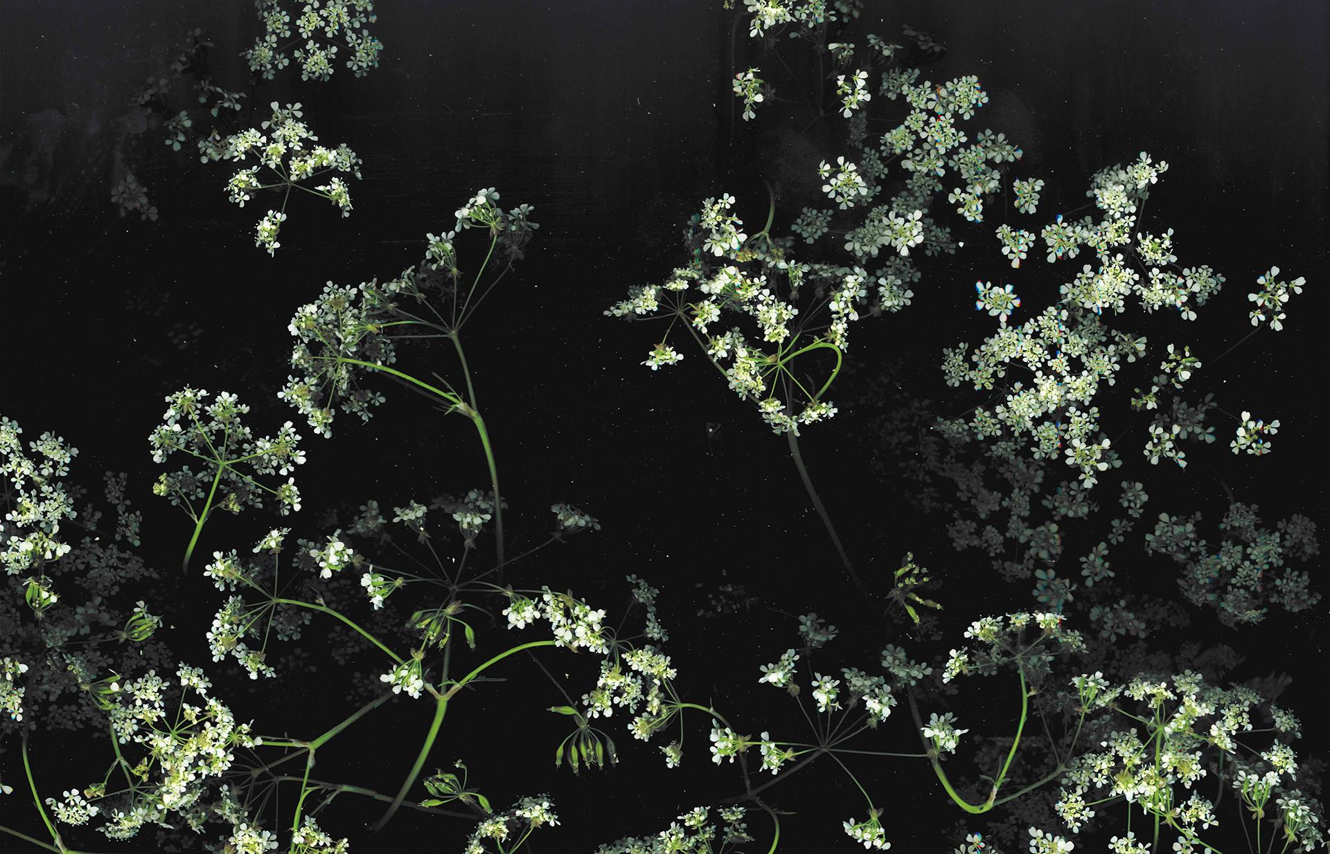 Flower Aesthetic Dark Wallpapers Wallpaper Cave