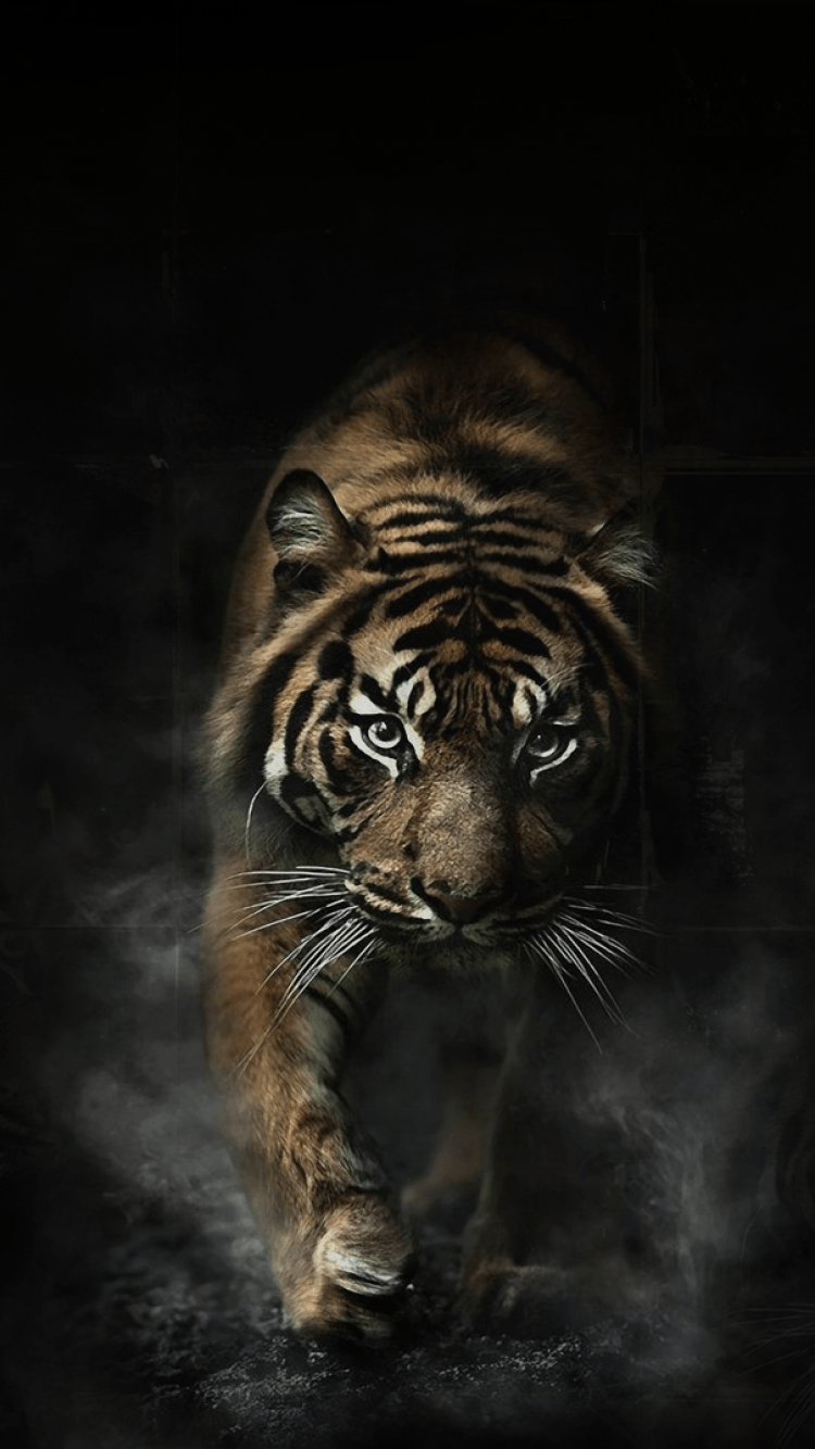 Tiger Phone Wallpapers Wallpaper Cave