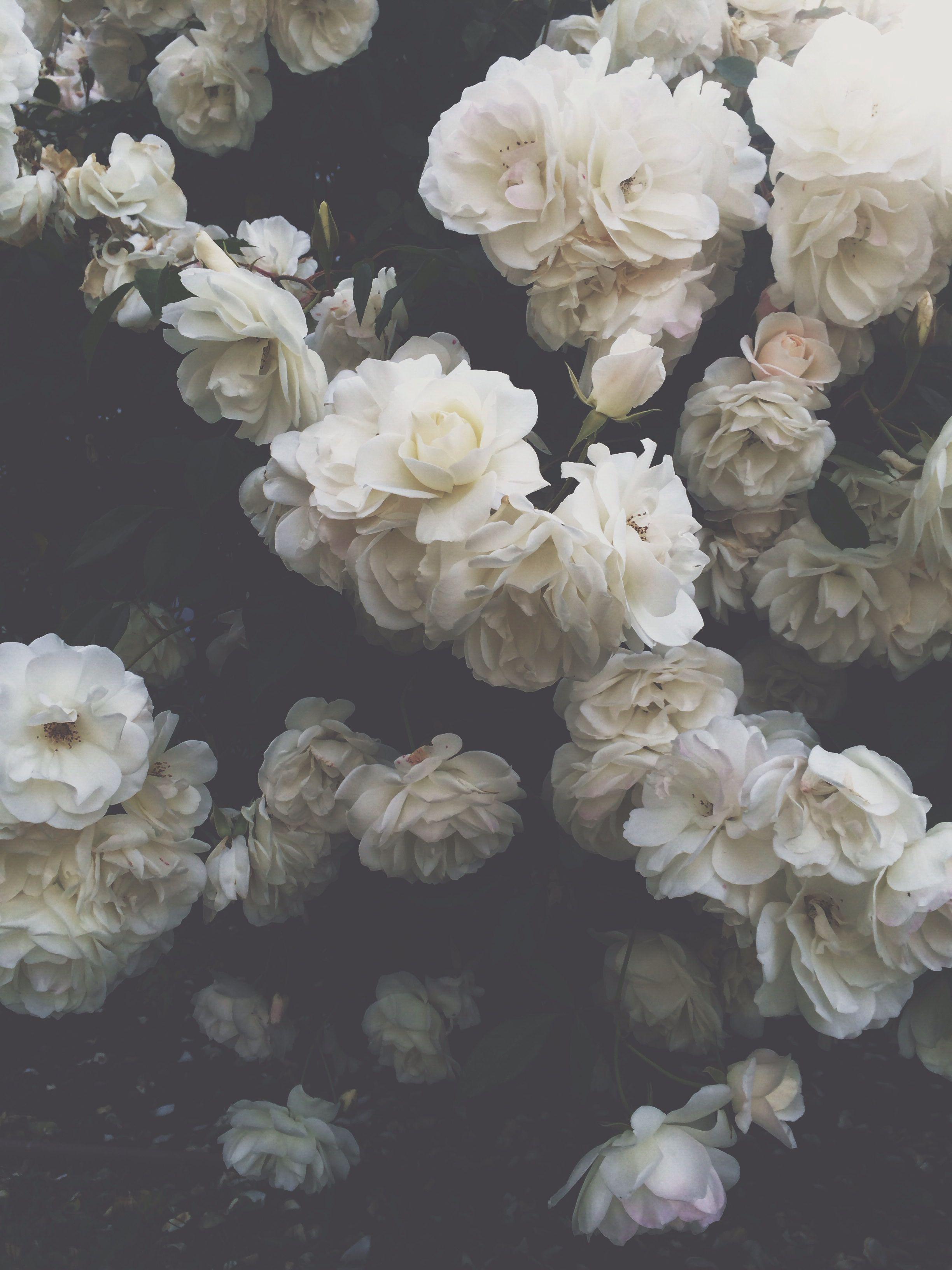 White Flower Aesthetic Wallpapers - Wallpaper Cave